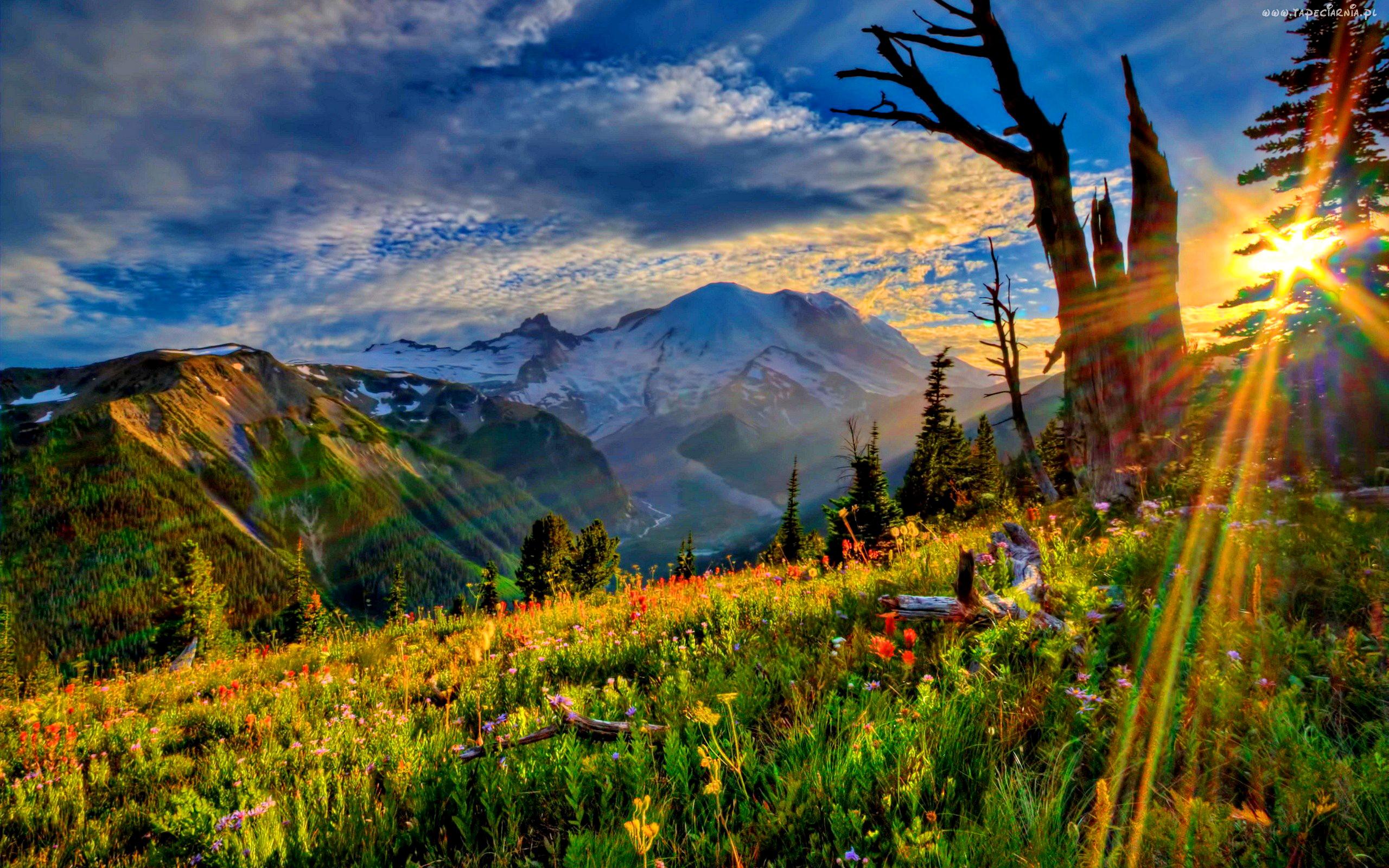 Meadow HD Wallpapers