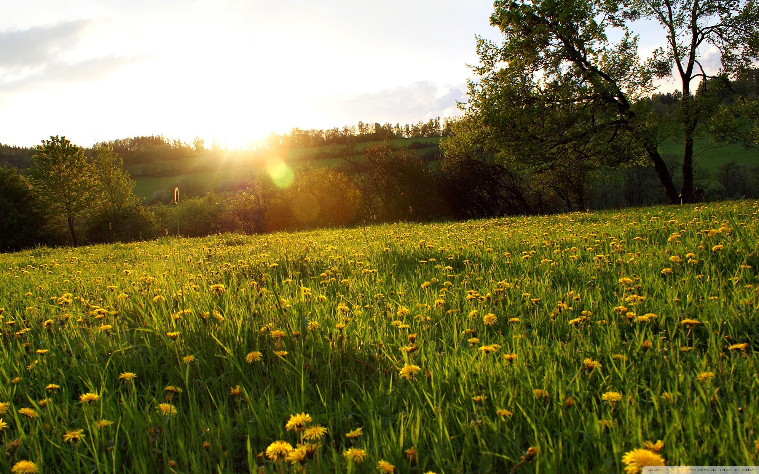 Meadow Wallpapers