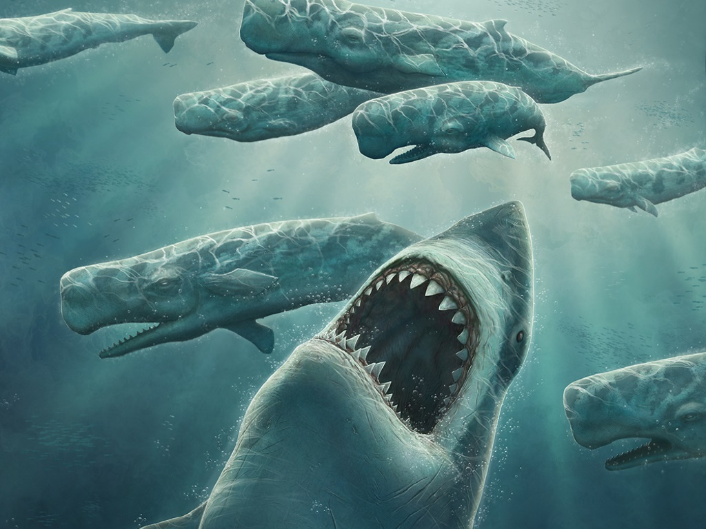 In the picture the megalodon is the big one in the red and the fine shark in green is the great-white and that little gentle man in blue is a human.