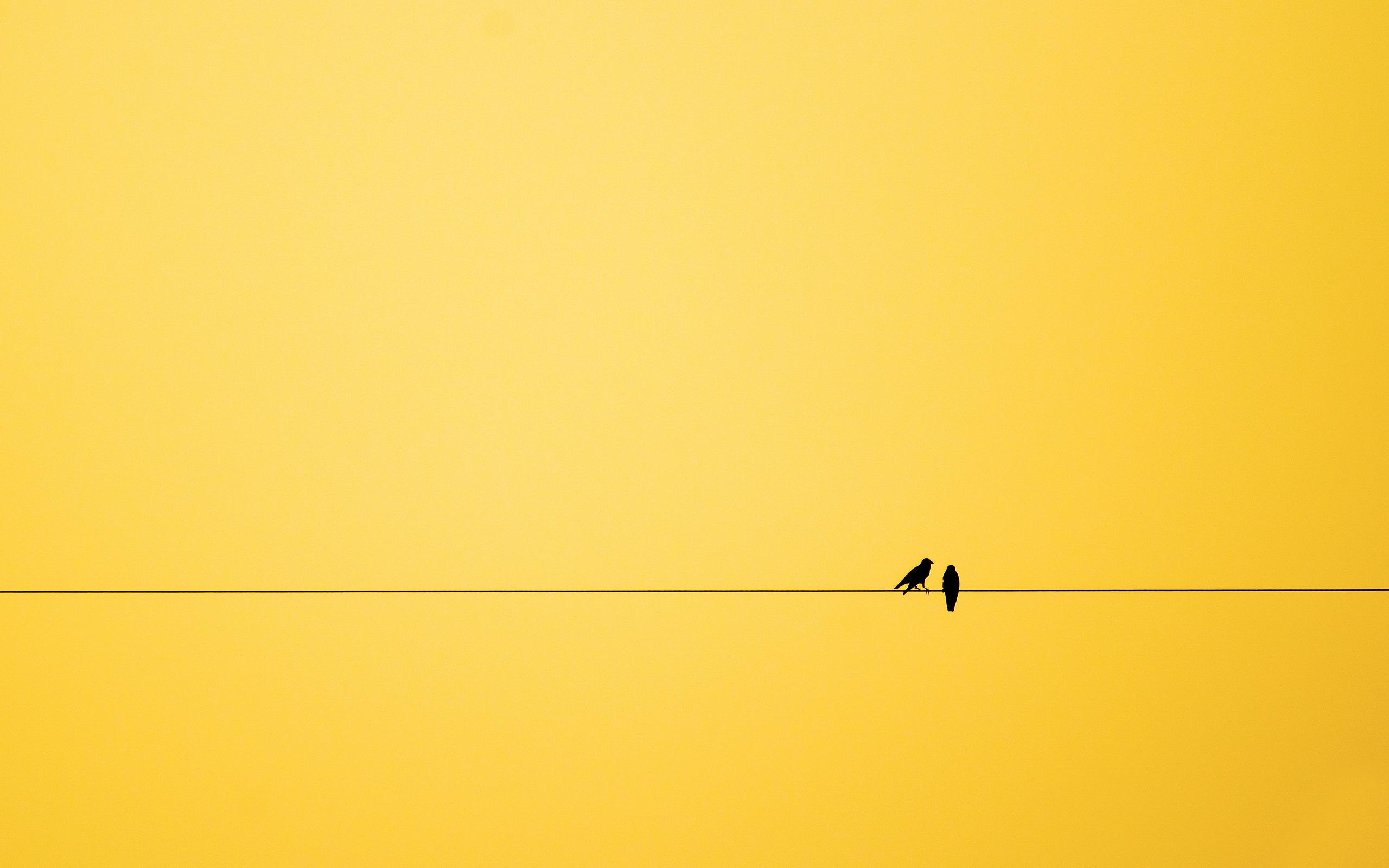 Minimalism Birds