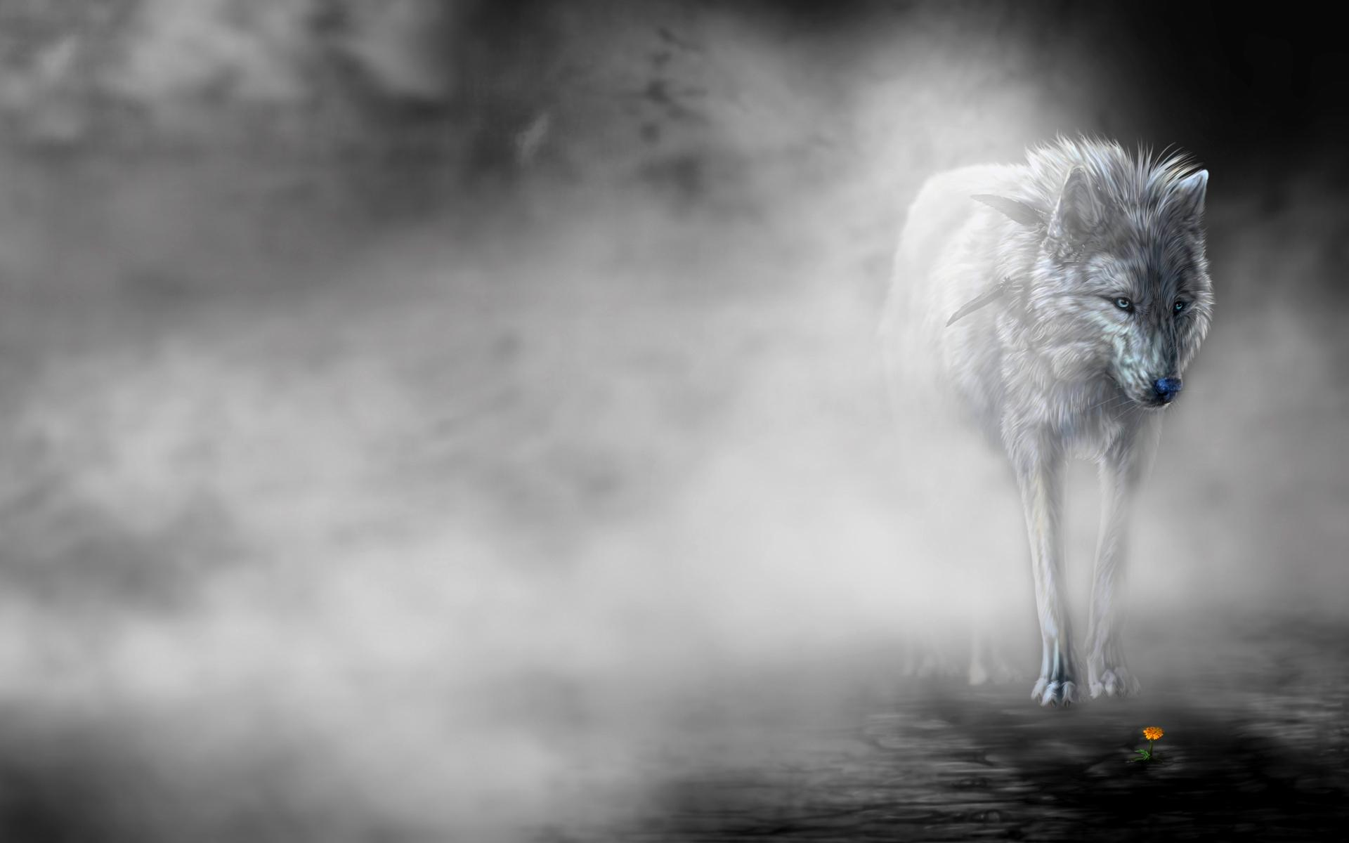 Lonely Wolf In The Mist Wallpaper #48817 - Resolution 1920x1200 px