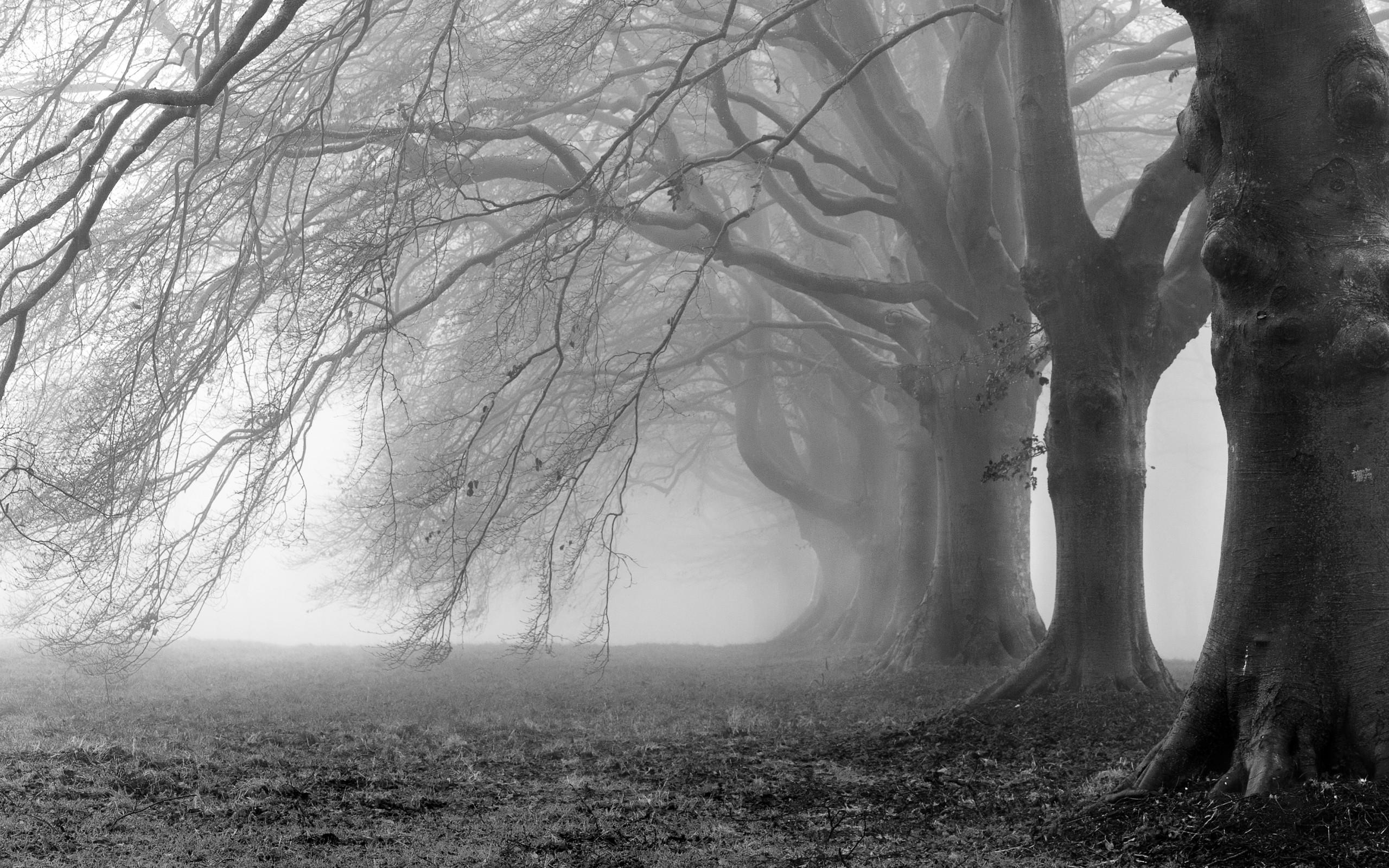 Mist Images