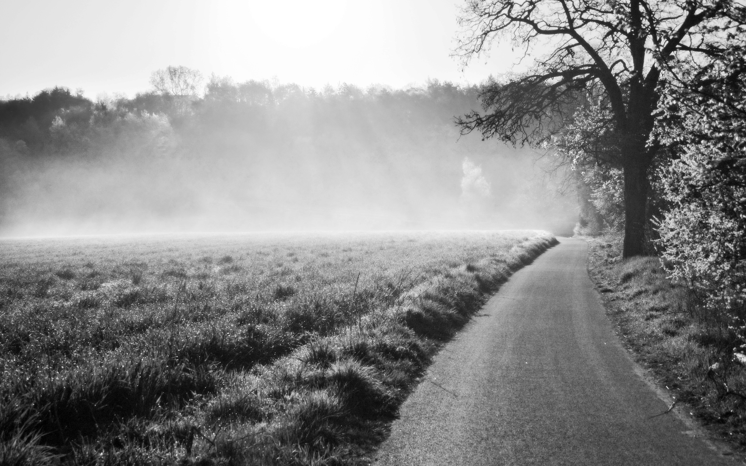 Morning Mist Plzen II