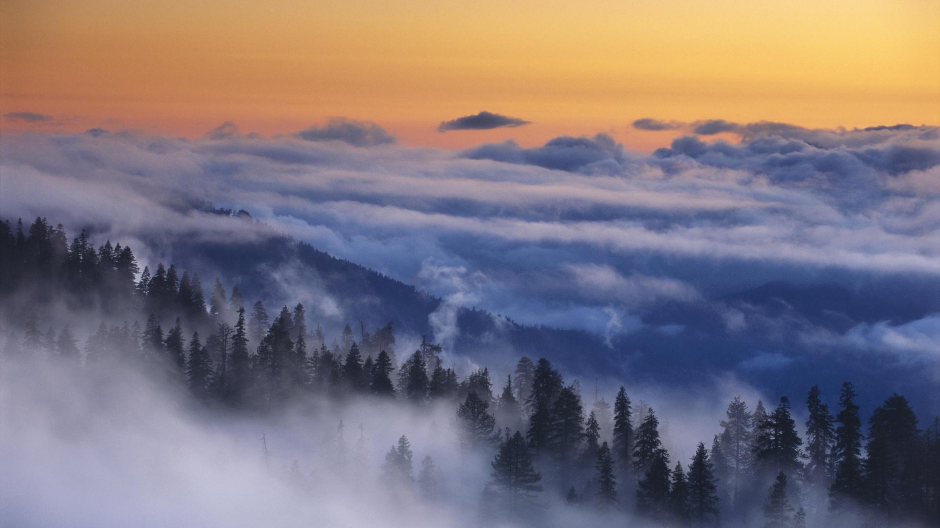 Mist Wallpaper 27422