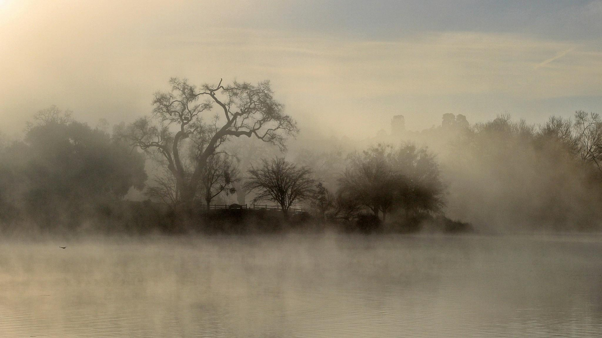 ... Mist Wallpaper · Mist Wallpaper