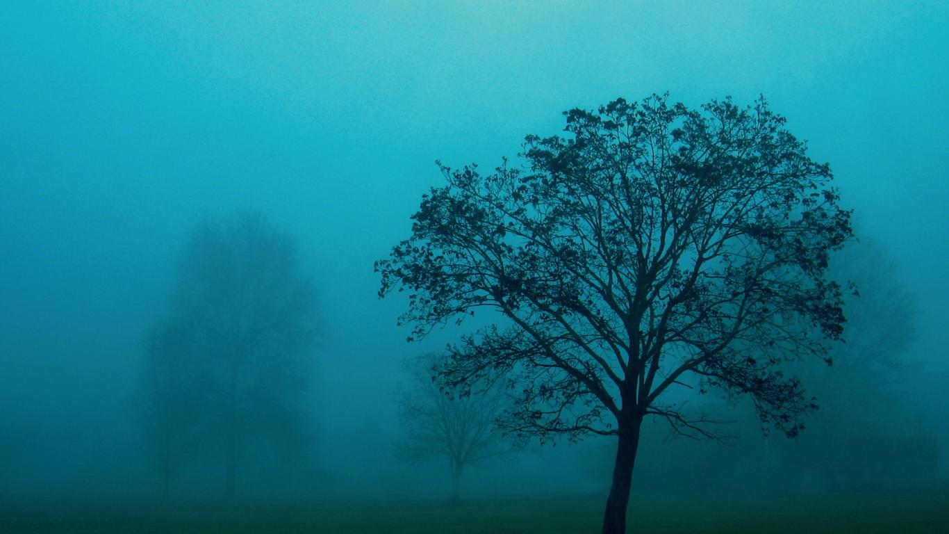 nature, trees, grass, green-grass, mist