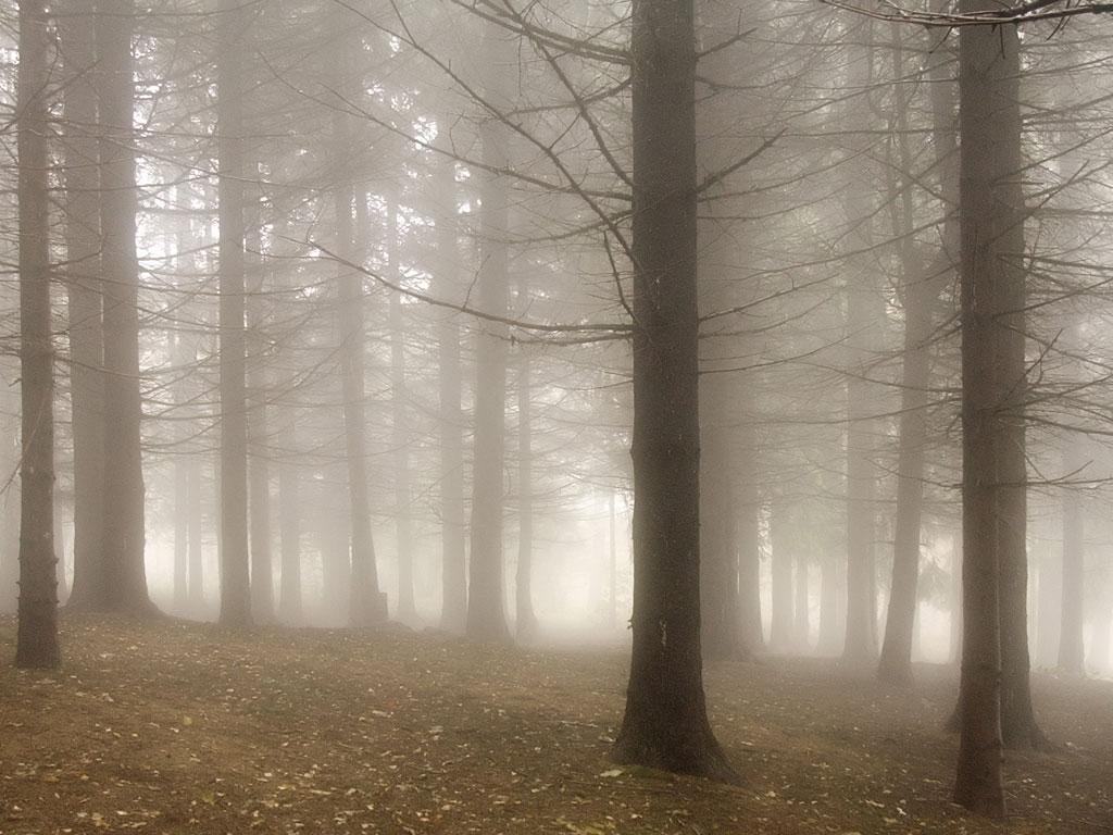 Misty Backgrounds