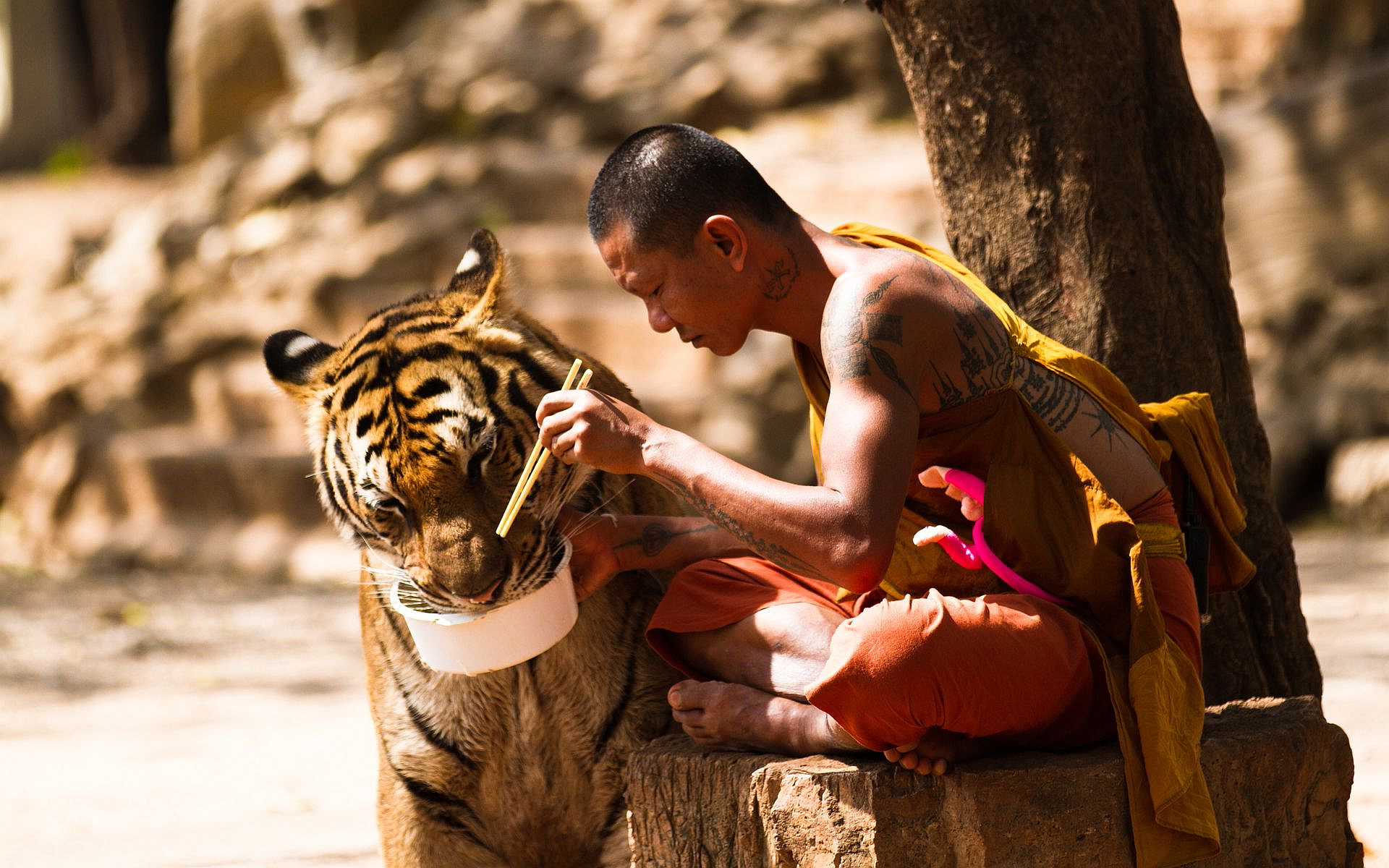 Monk tiger