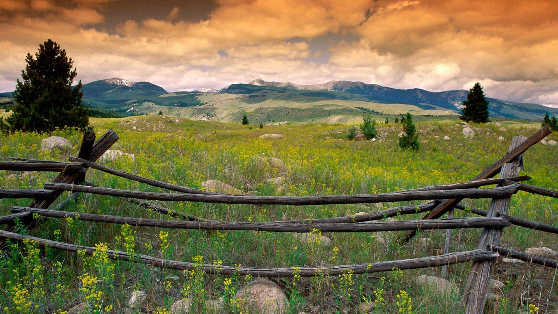 Flint Mountains Wildflowers Montana Hd