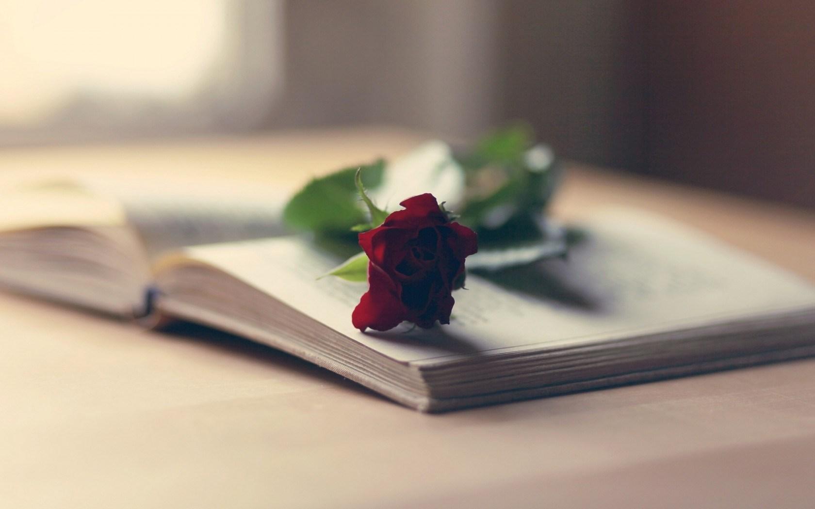 Mood Book Flower Red Rose