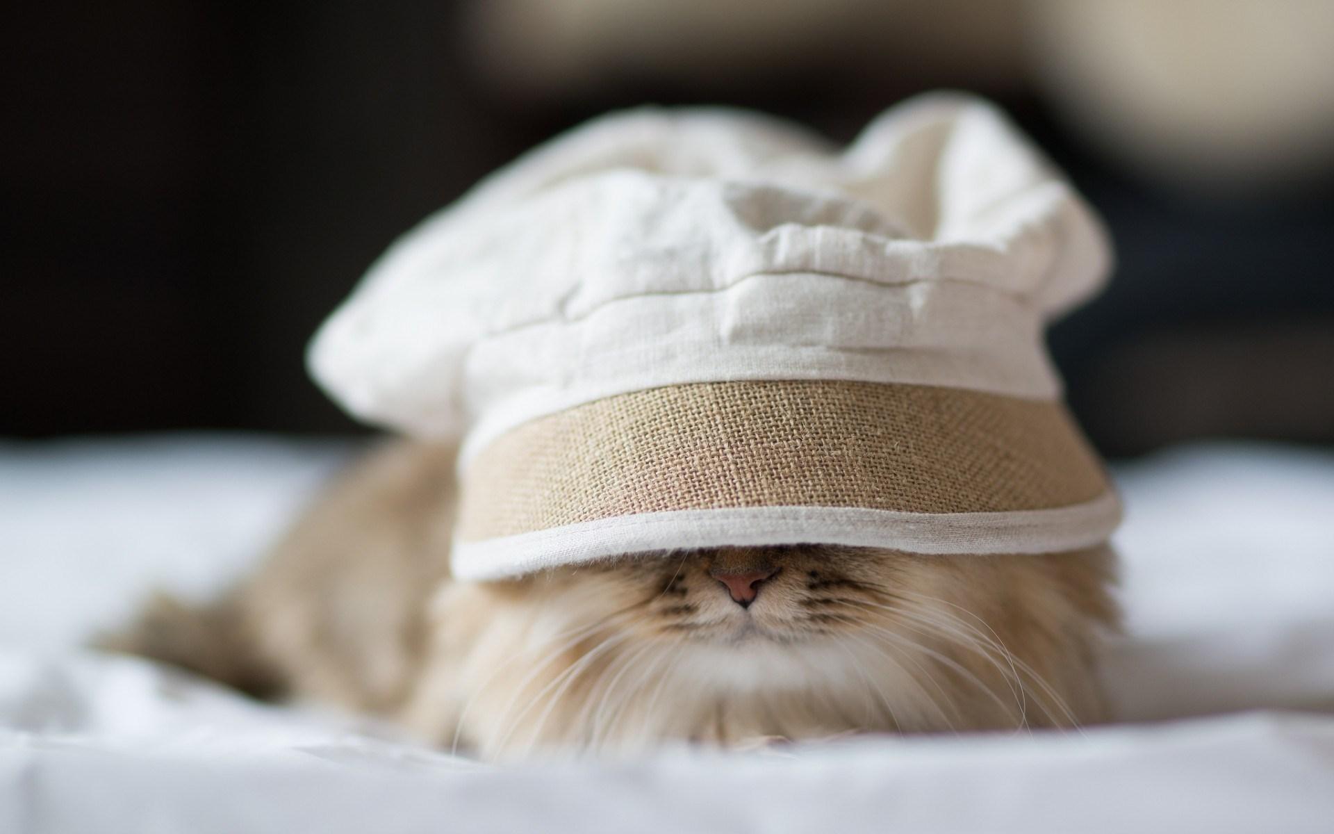 Cat Bed Mood