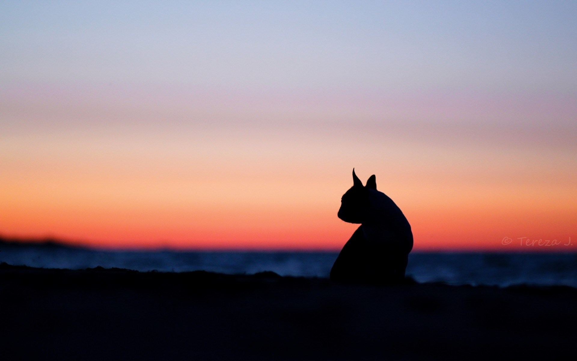Mood Dog Silhouette Nature Sunset