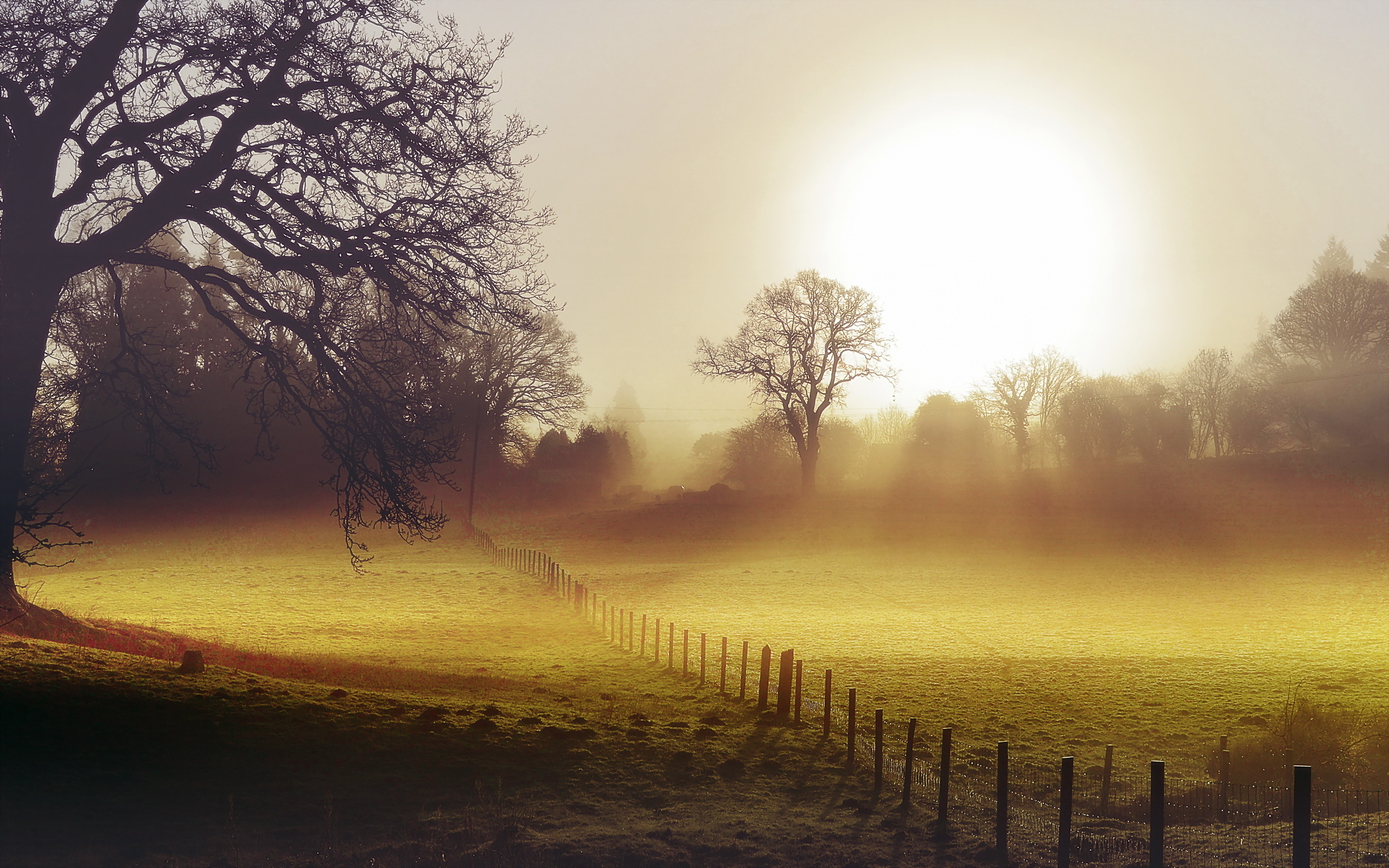 Morning Fog Backgrounds