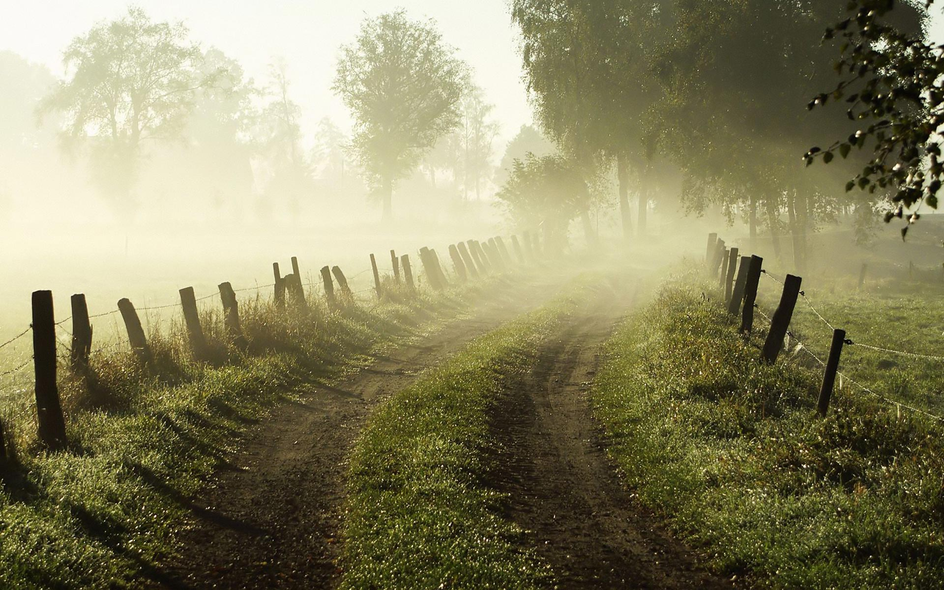 Desktop Wallpaper · Gallery · Nature Morning Fog Desktop Wallpaper