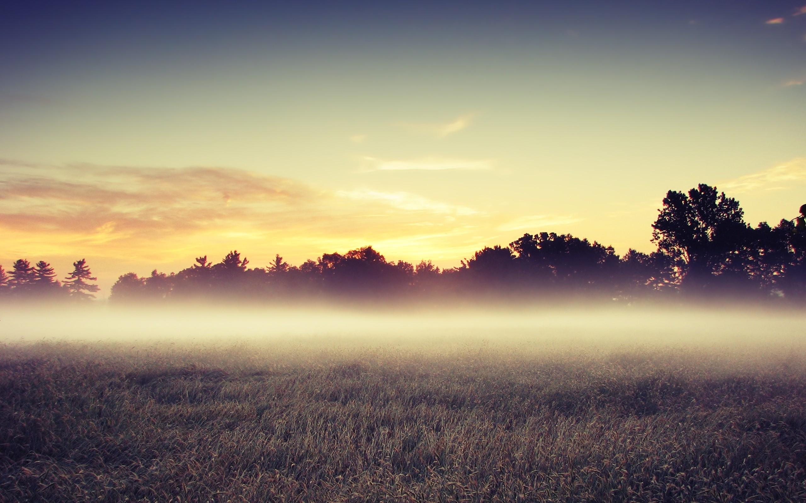 Morning Mist Wide Wallpaper