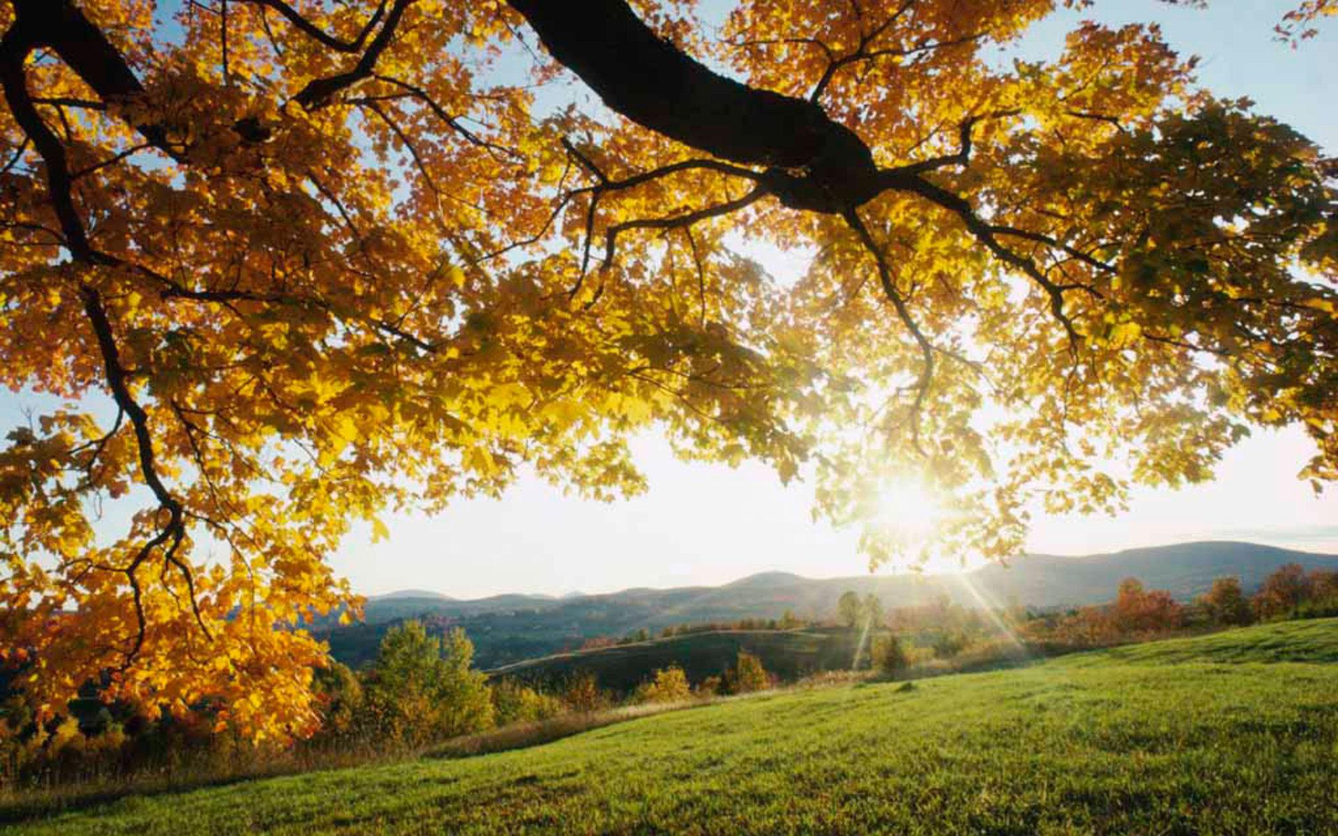Landscape Morning Wallpaper