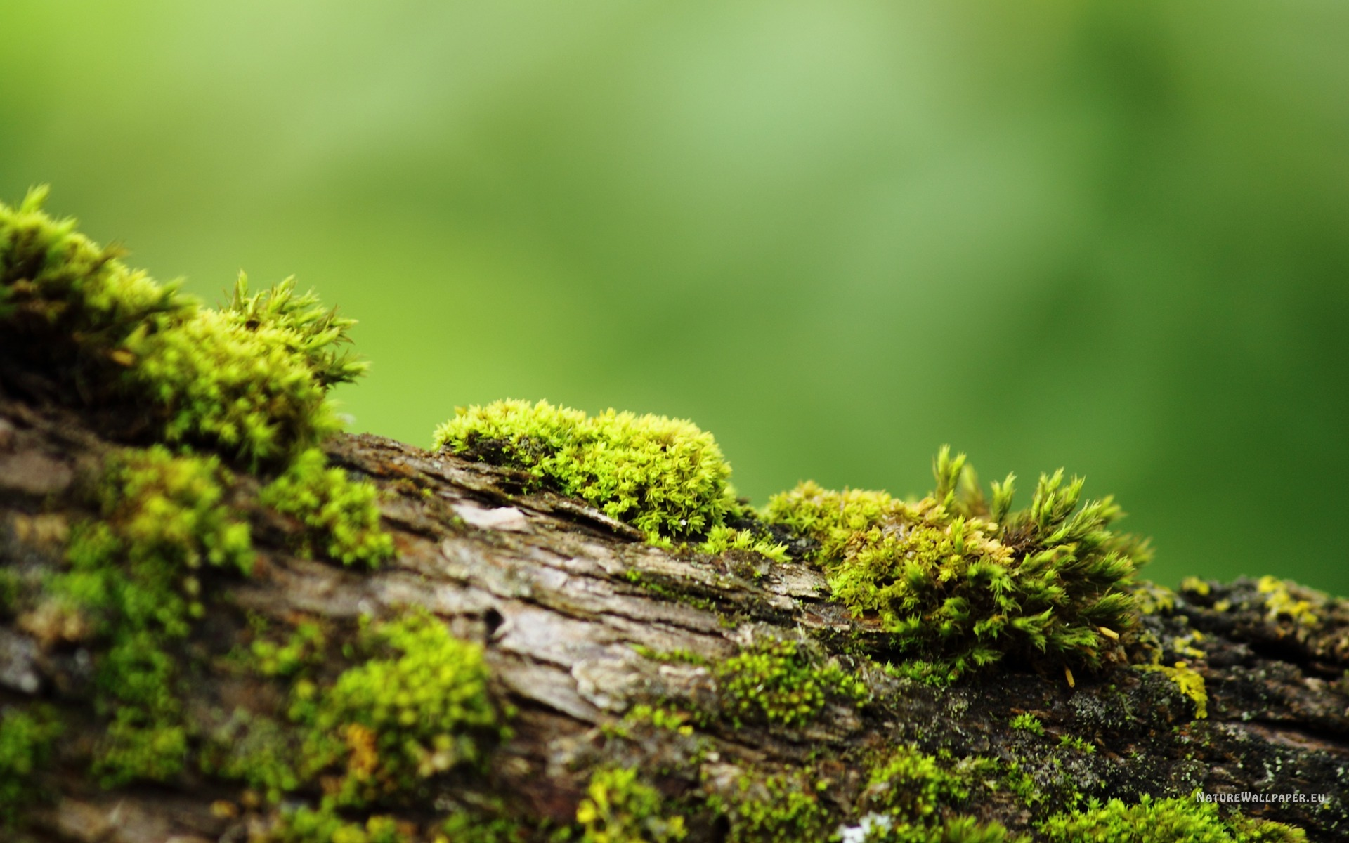 Bark With Moss