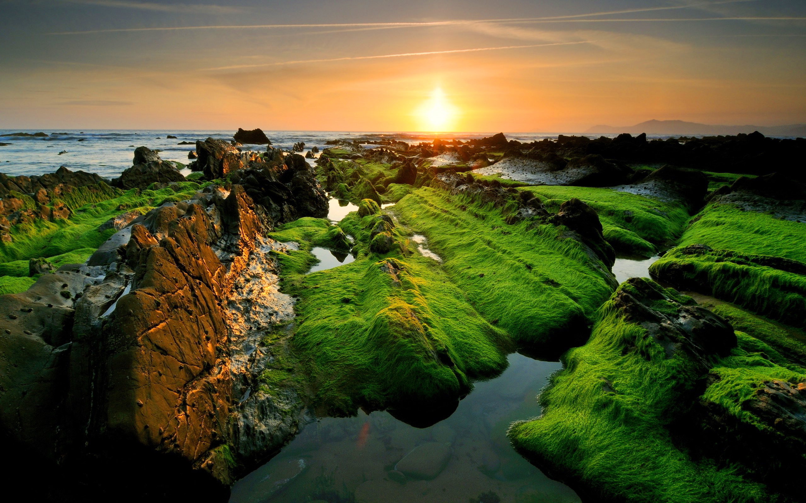Moss coast sunset Wallpapers Pictures Photos Images. «