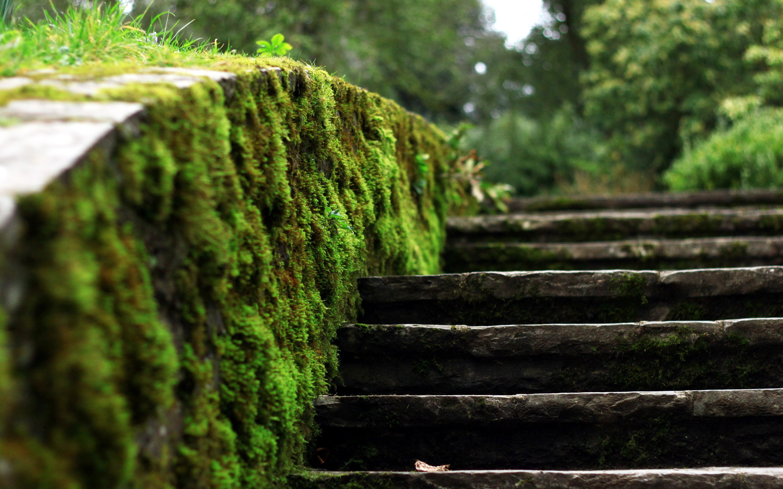 Cool nature backgrounds wallpaper 1920x1080 84040 related wallpapers from cool nature backgrounds moss stairs voltagebd Choice Image