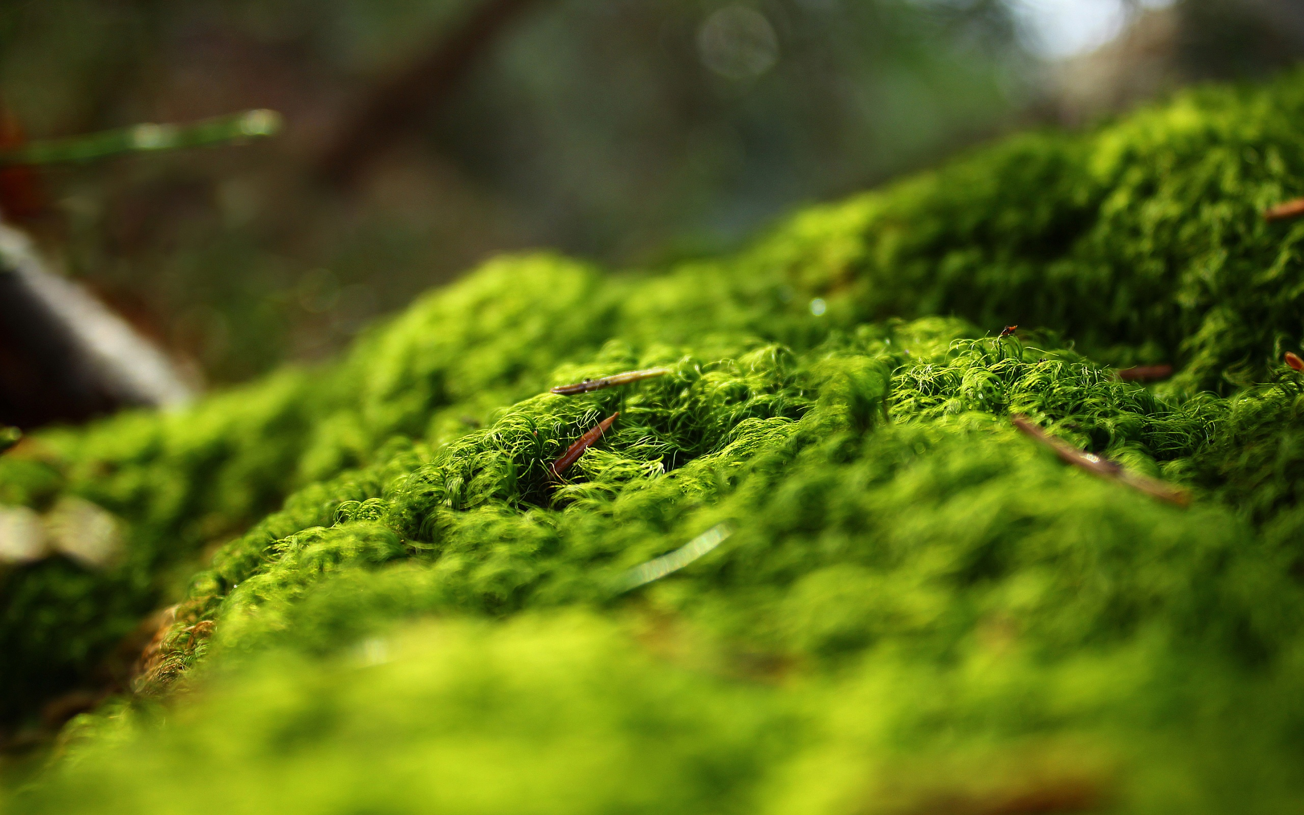 Views: 2824 Moss Wallpaper 22900