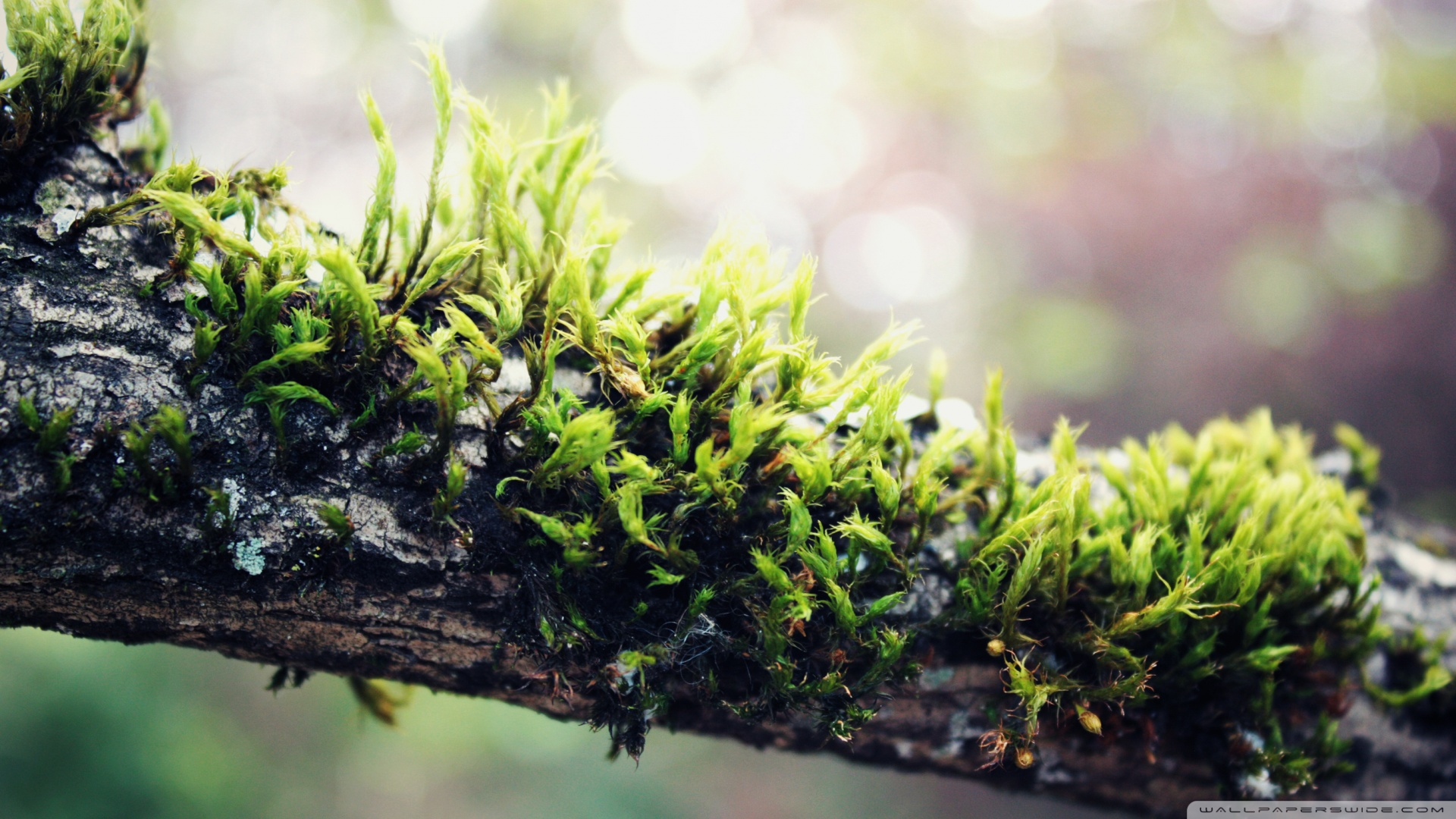 Moss Wallpaper HD