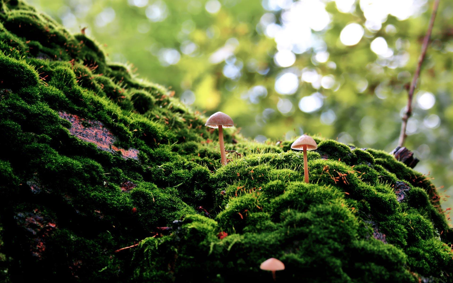 Moss Wallpapers