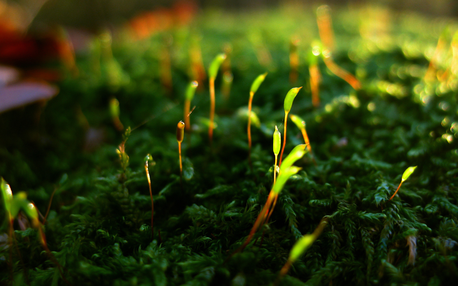 HD Wallpaper | Background ID:174630. 1920x1200 Earth Moss