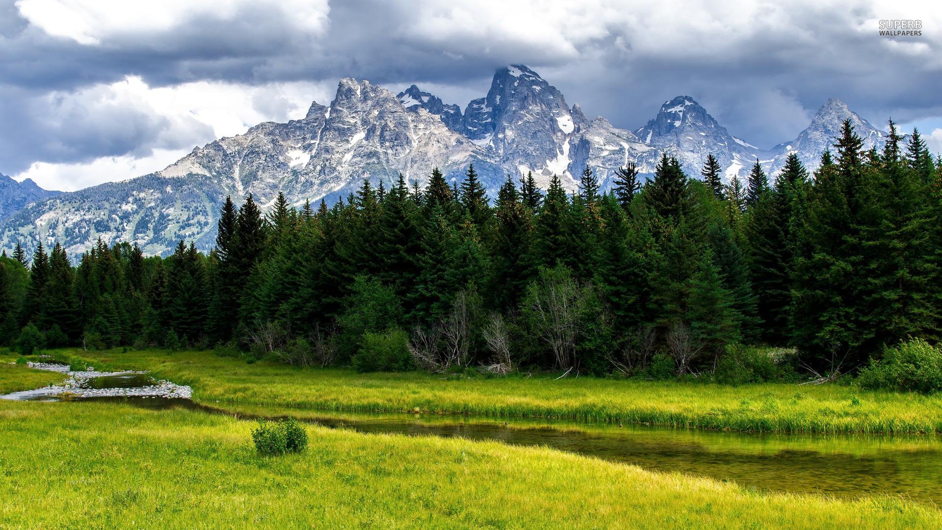 Mountain Meadow Wallpaper