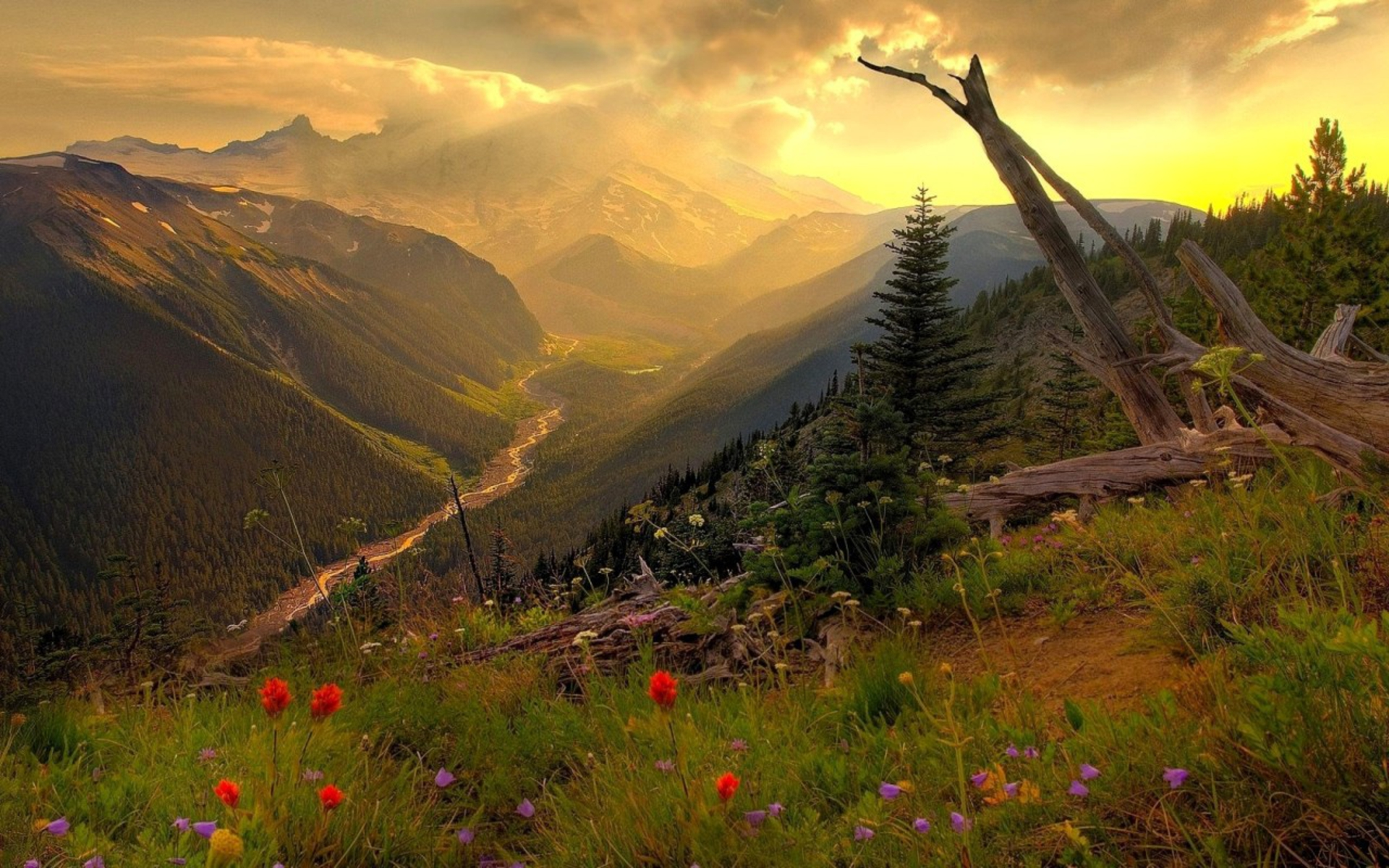 DOWNLOAD: Mountain Valley flowers.jpg free picture 2560 x 1600