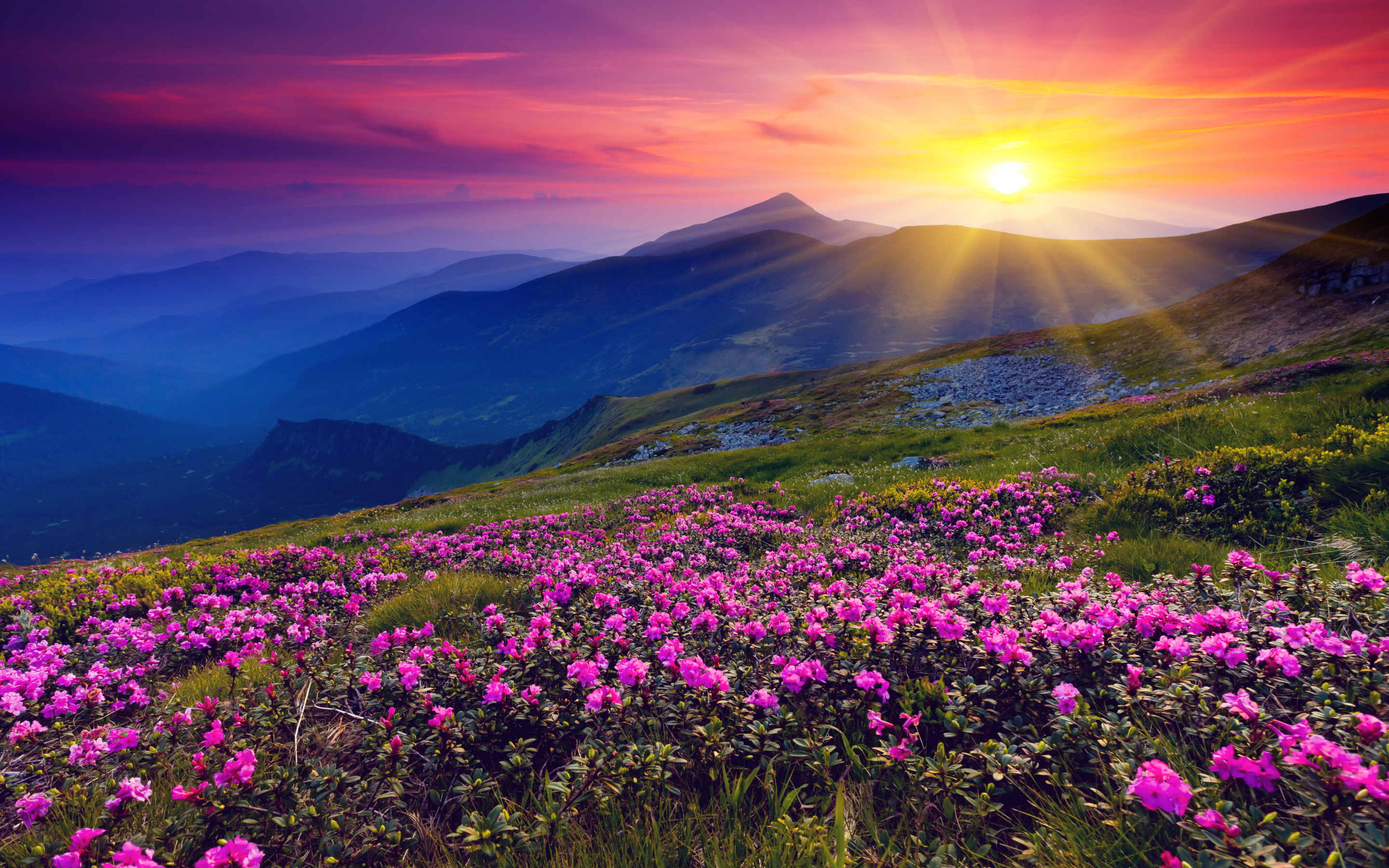 Mountains azalea sunset