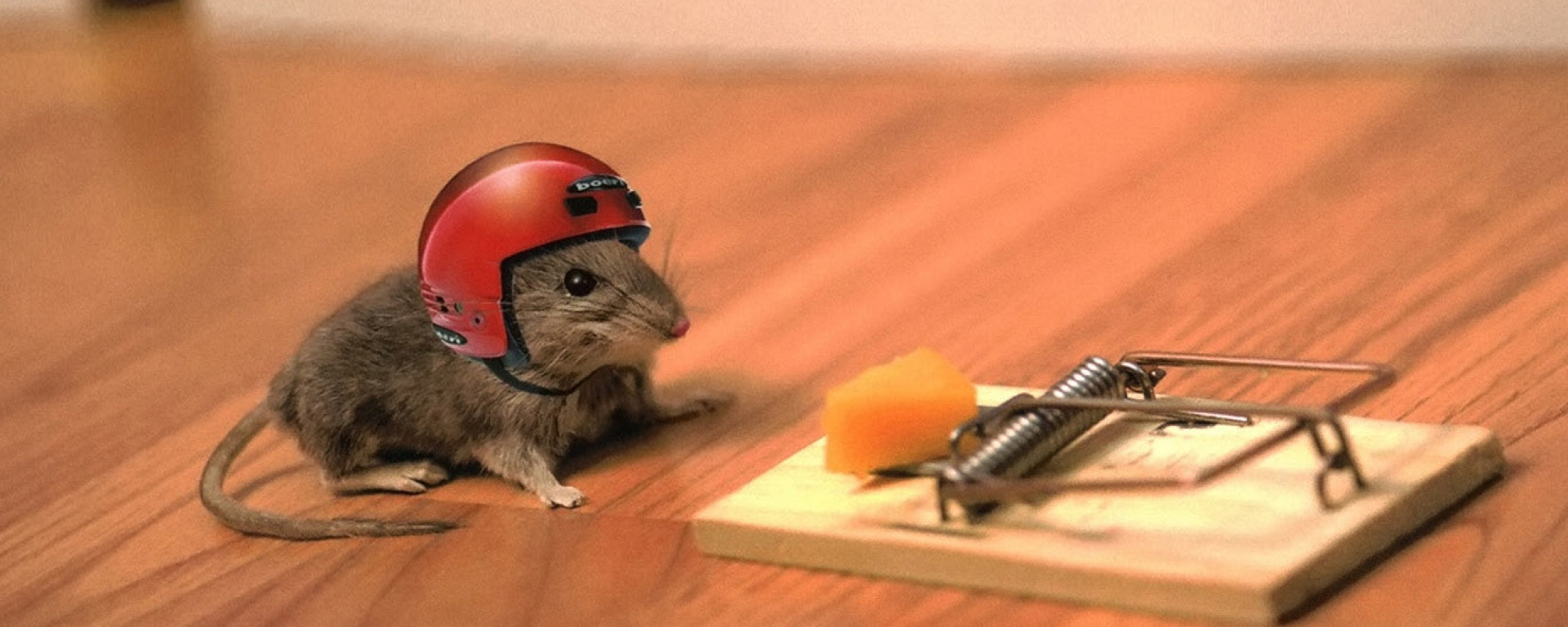 Mouse in helmet