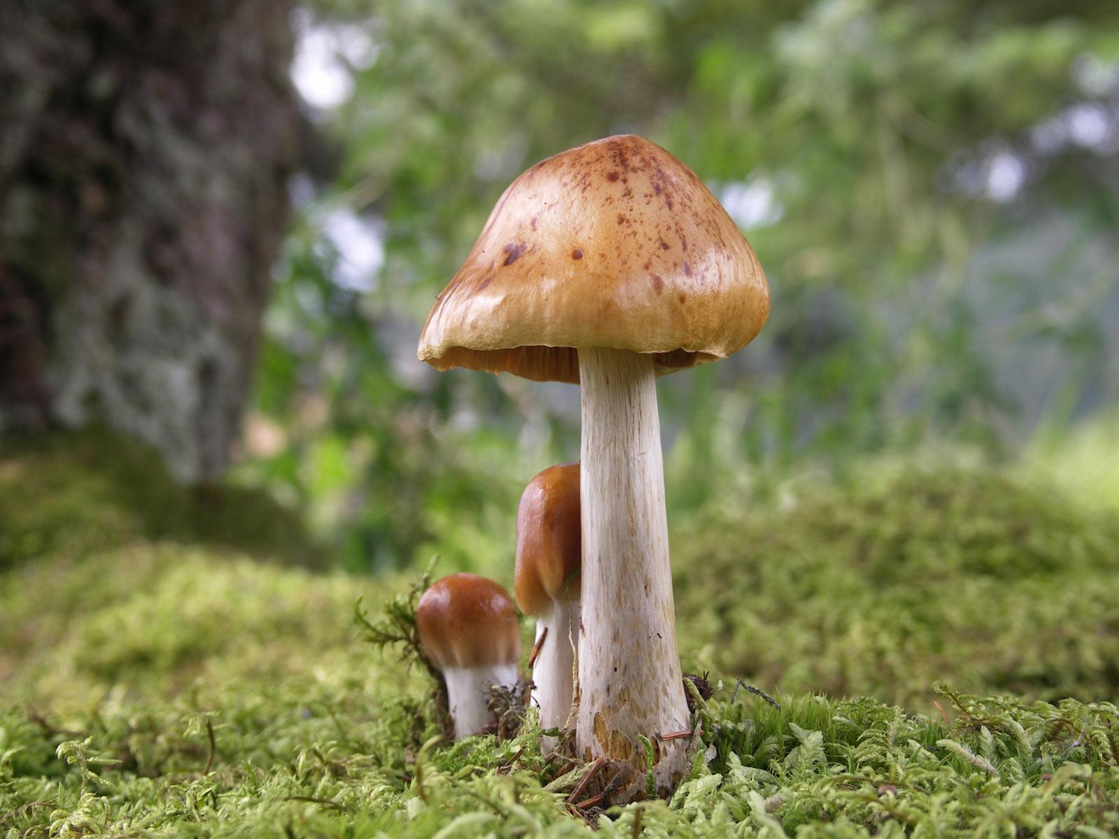 Desktop Wallpaper · Gallery · Nature Wood Mushroom