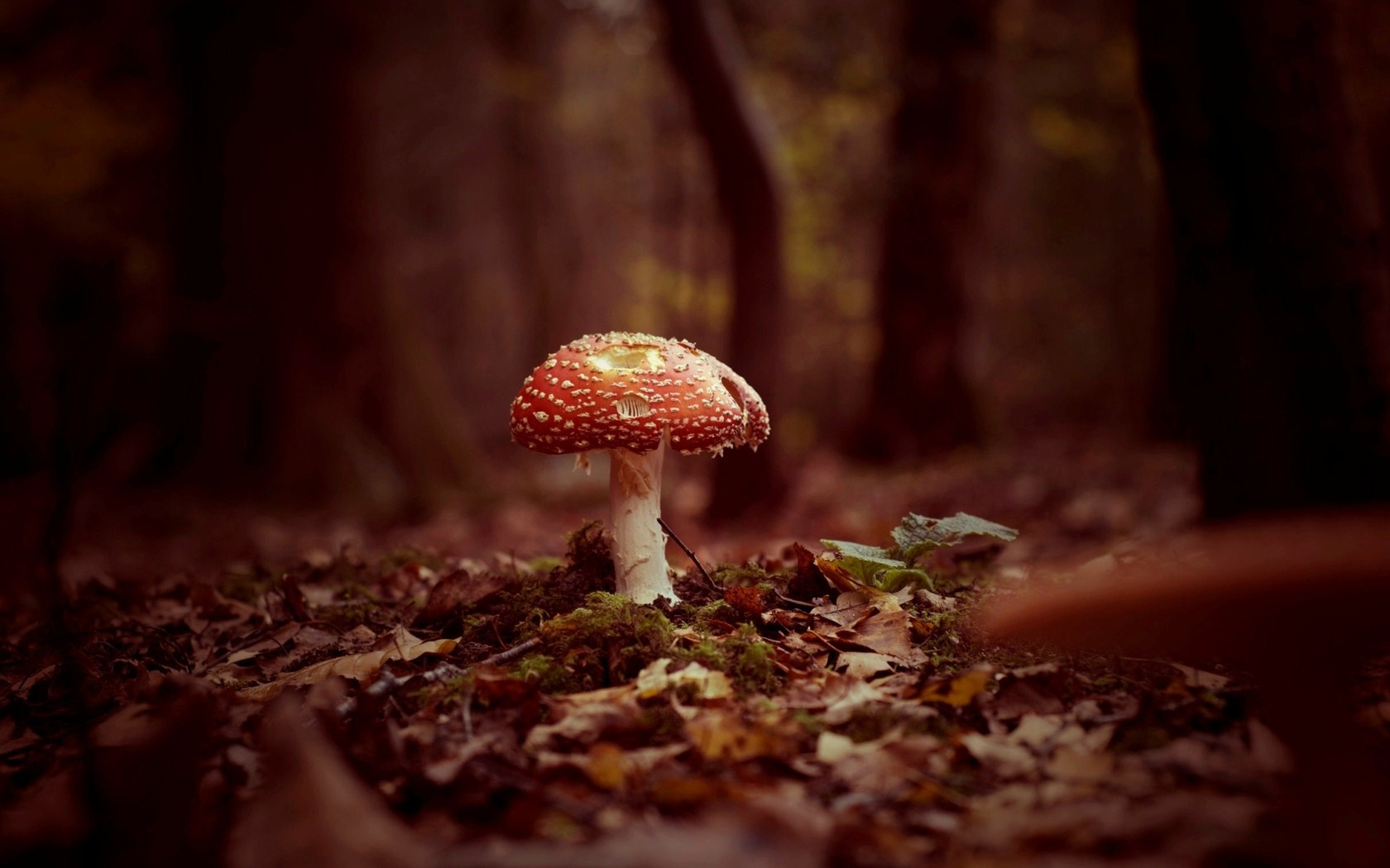 Forest Mushroom Autumn Nature HD Wallpaper