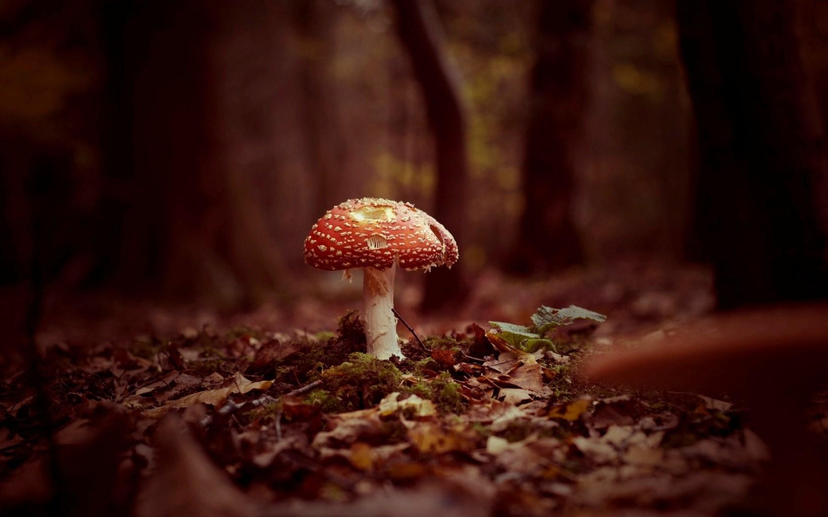 Mushroom Autumn Nature