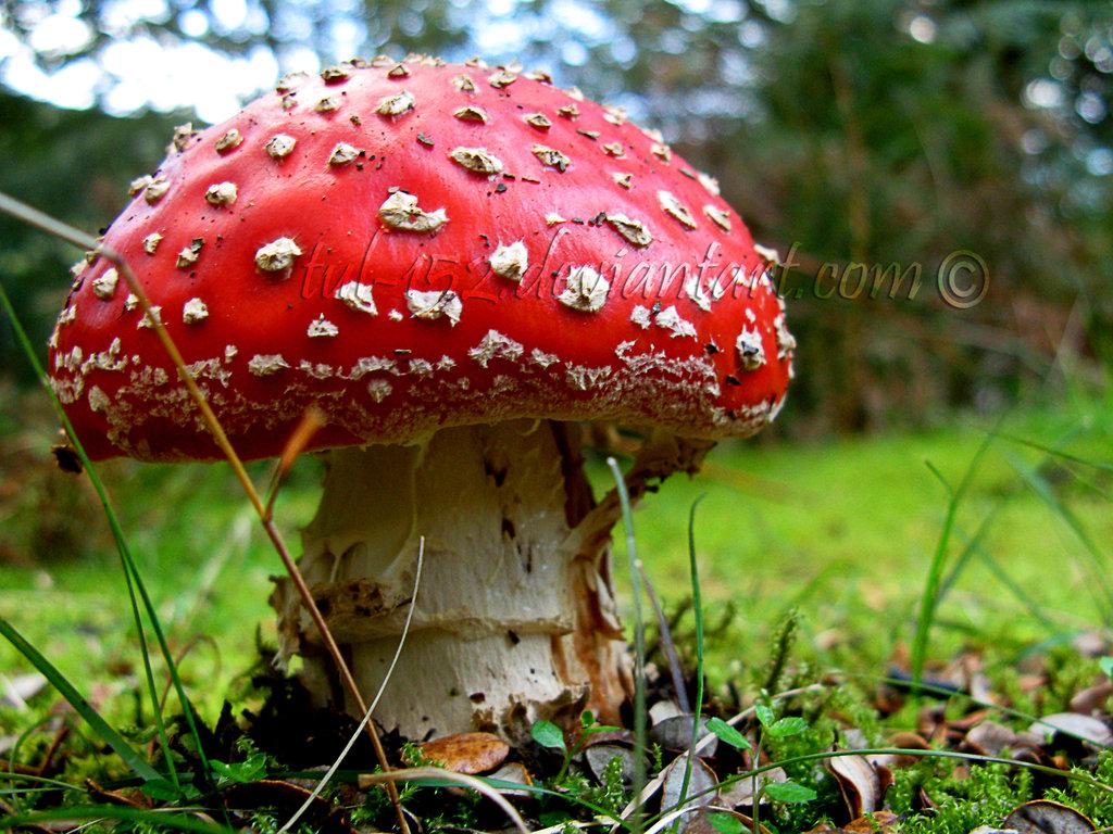 Magic Mushroom by Tul-152 ...