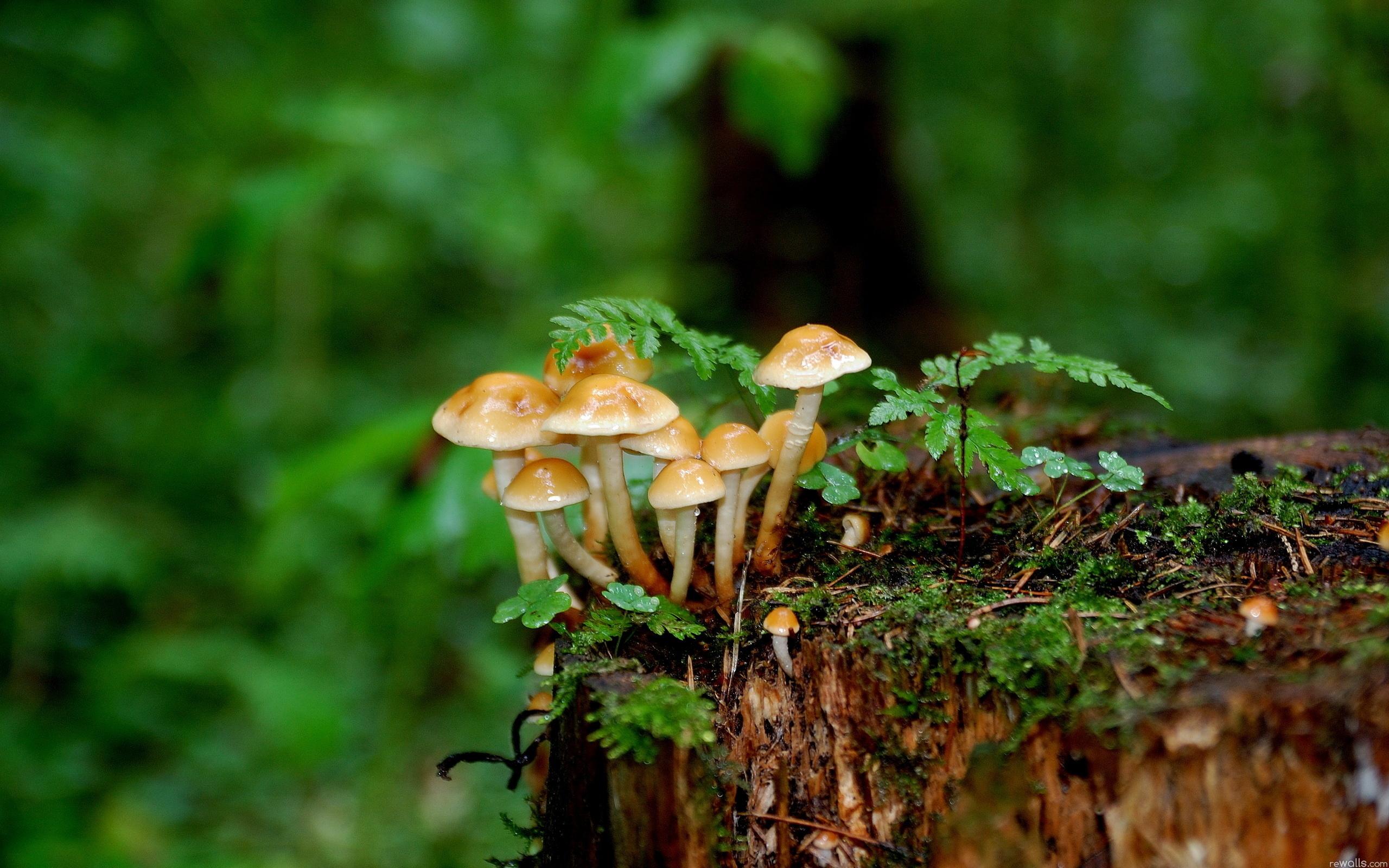 Earth - Mushroom Wallpaper