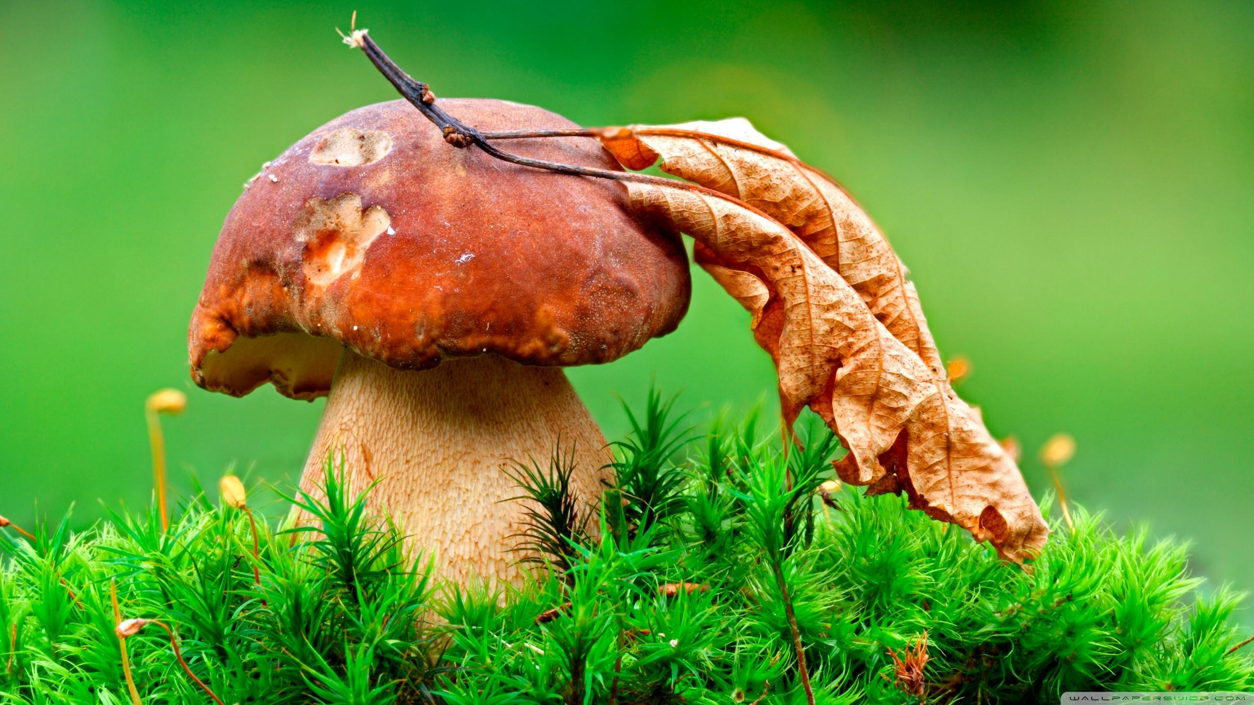 Mushroom Wallpaper HD