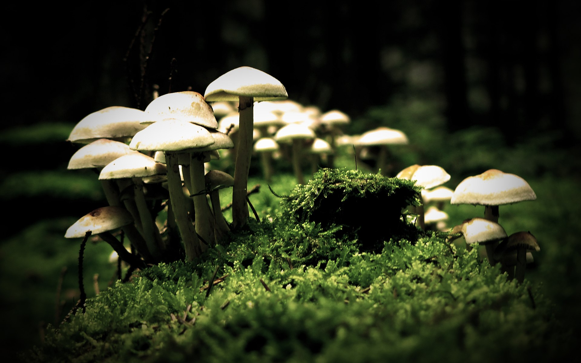 Mushrooms Nature