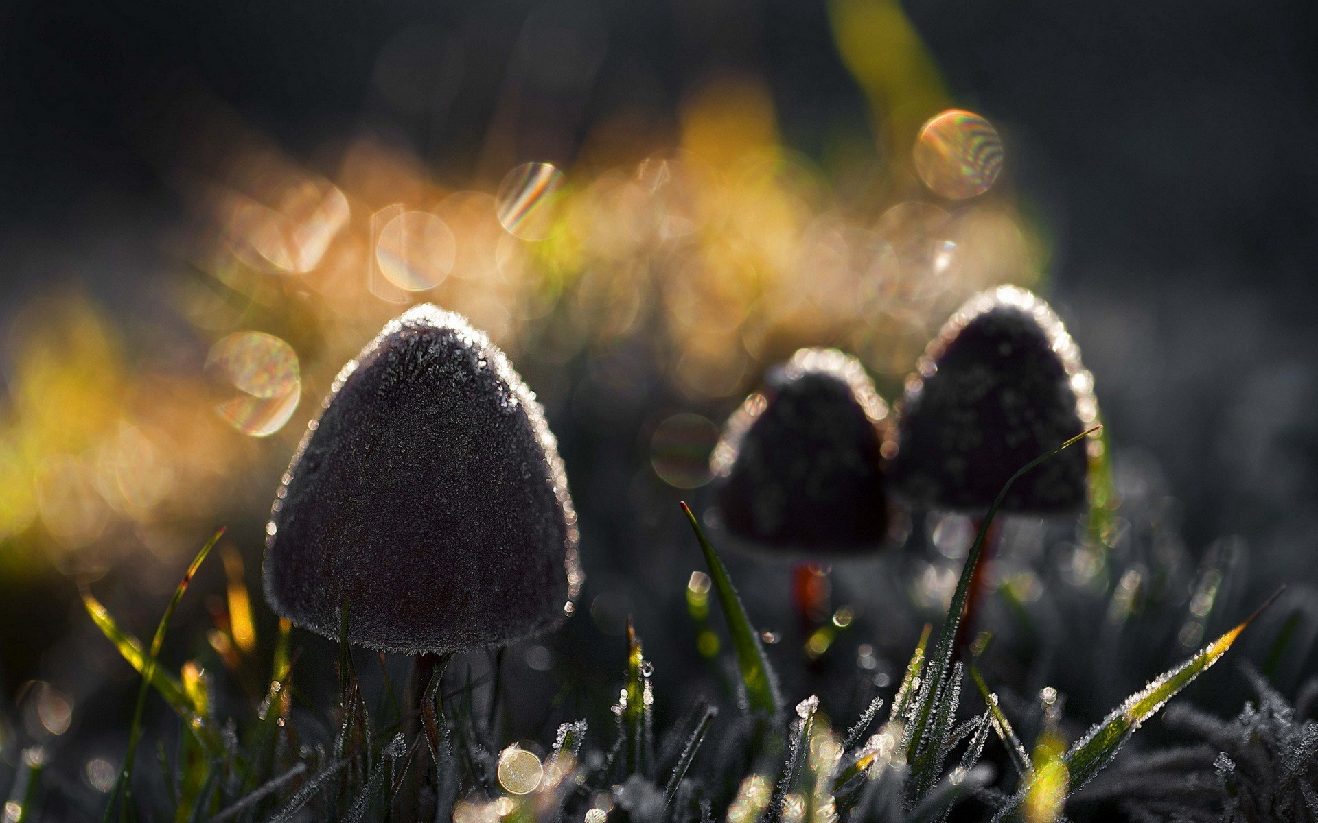 Mushrooms Nature Light