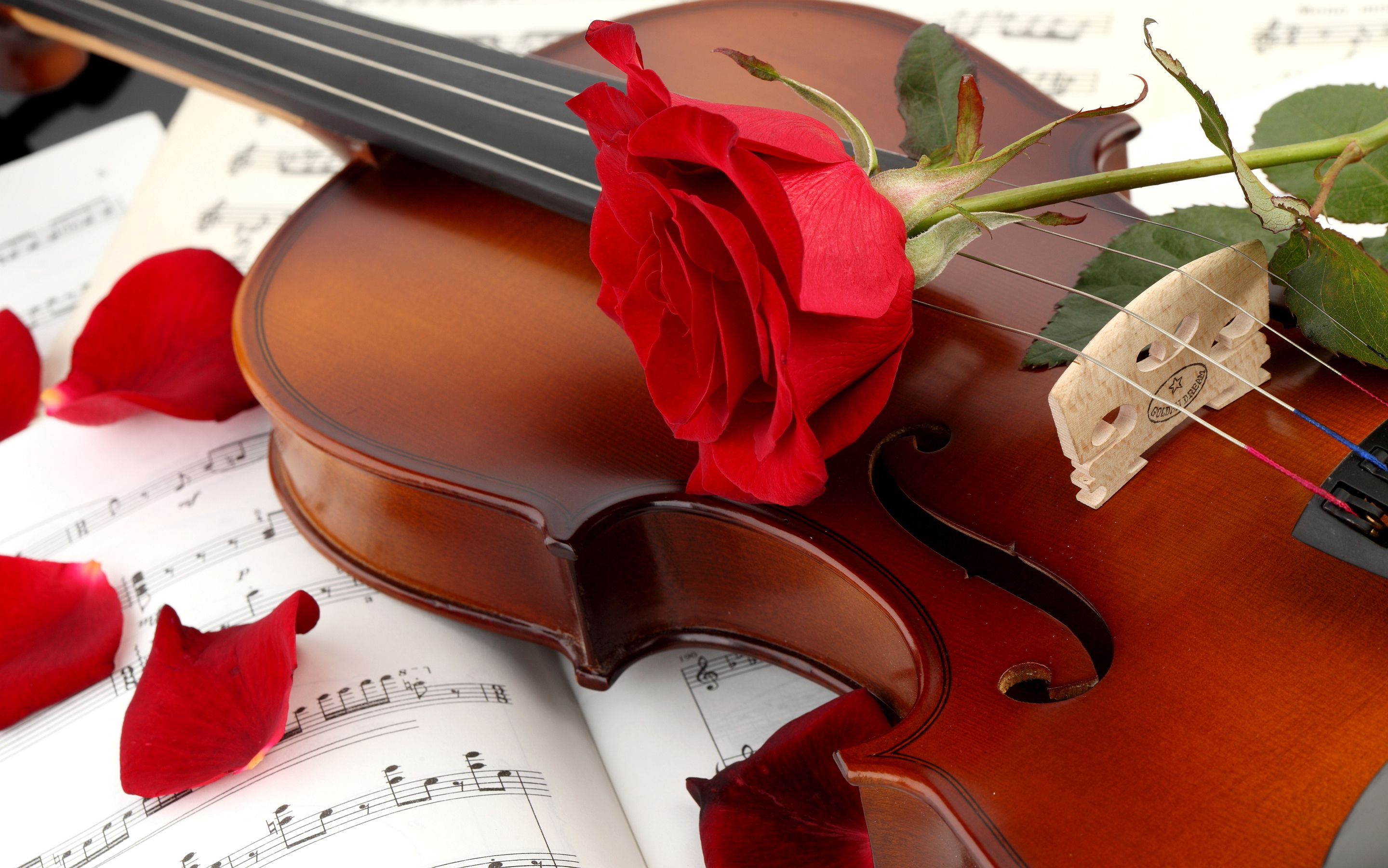 Music violin red rose