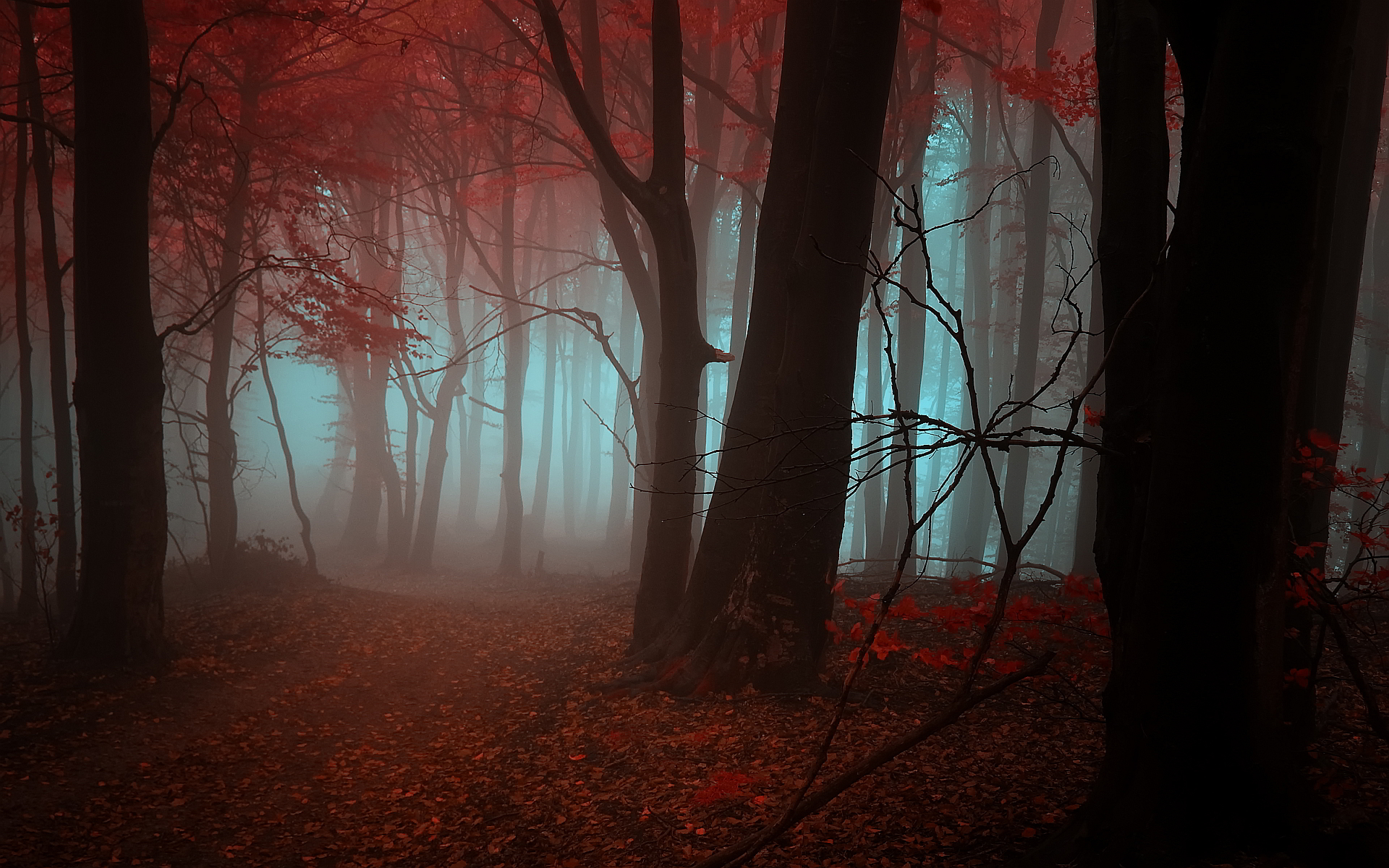 Mystic autumn forest