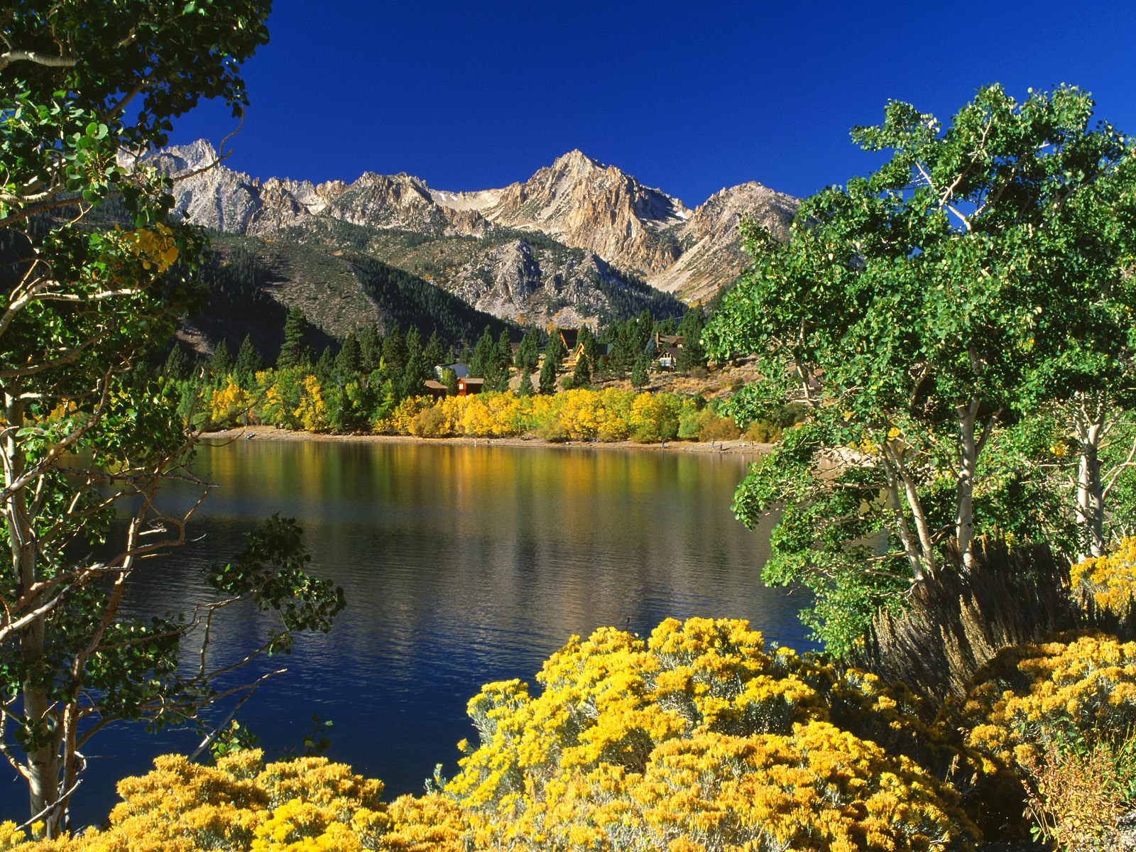 Wallpaper of california nature toiyabe national forest