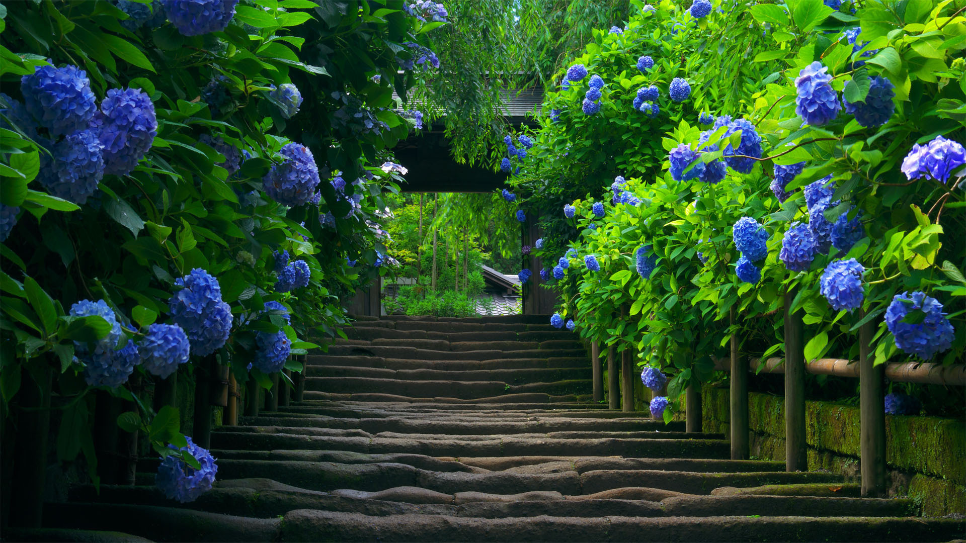 Nature ...