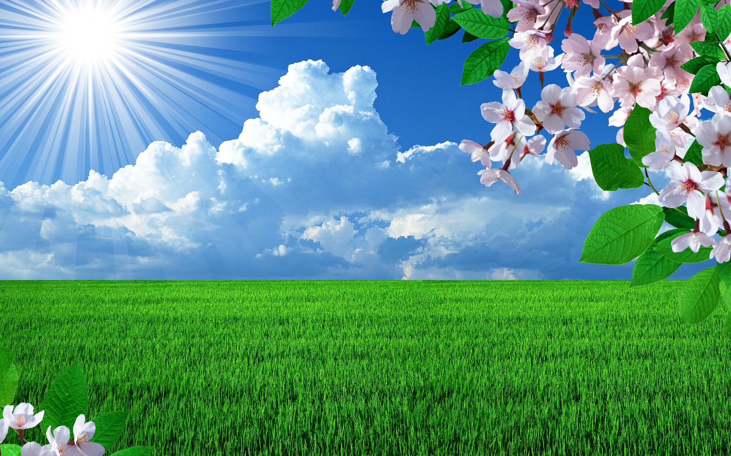 Beautiful Nature Spring Hd Background Wallpaper 17 HD Wallpapers