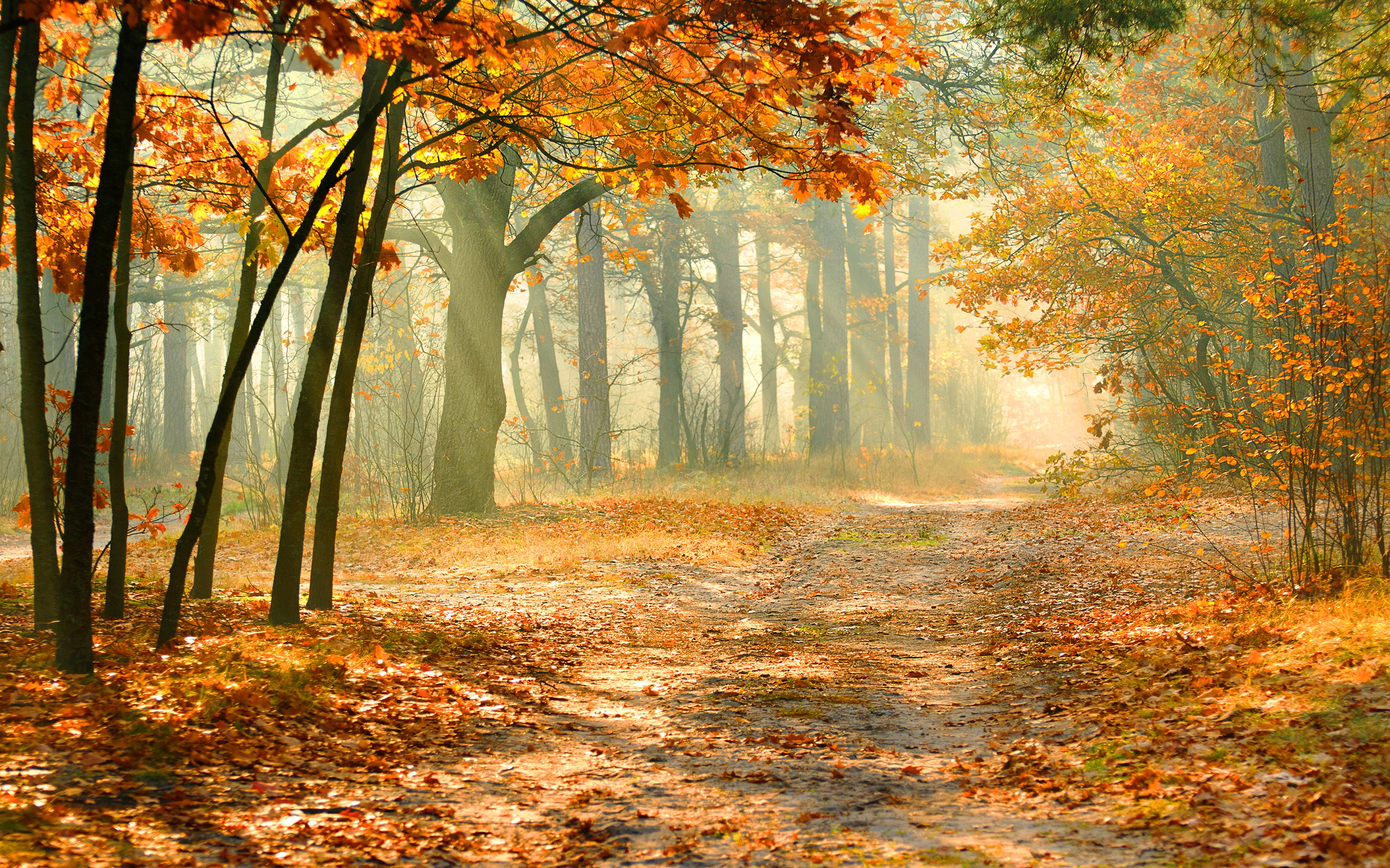 Nature autumn forest