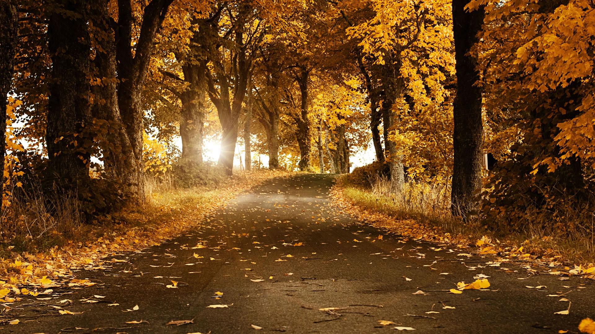 ... Nature Background ...