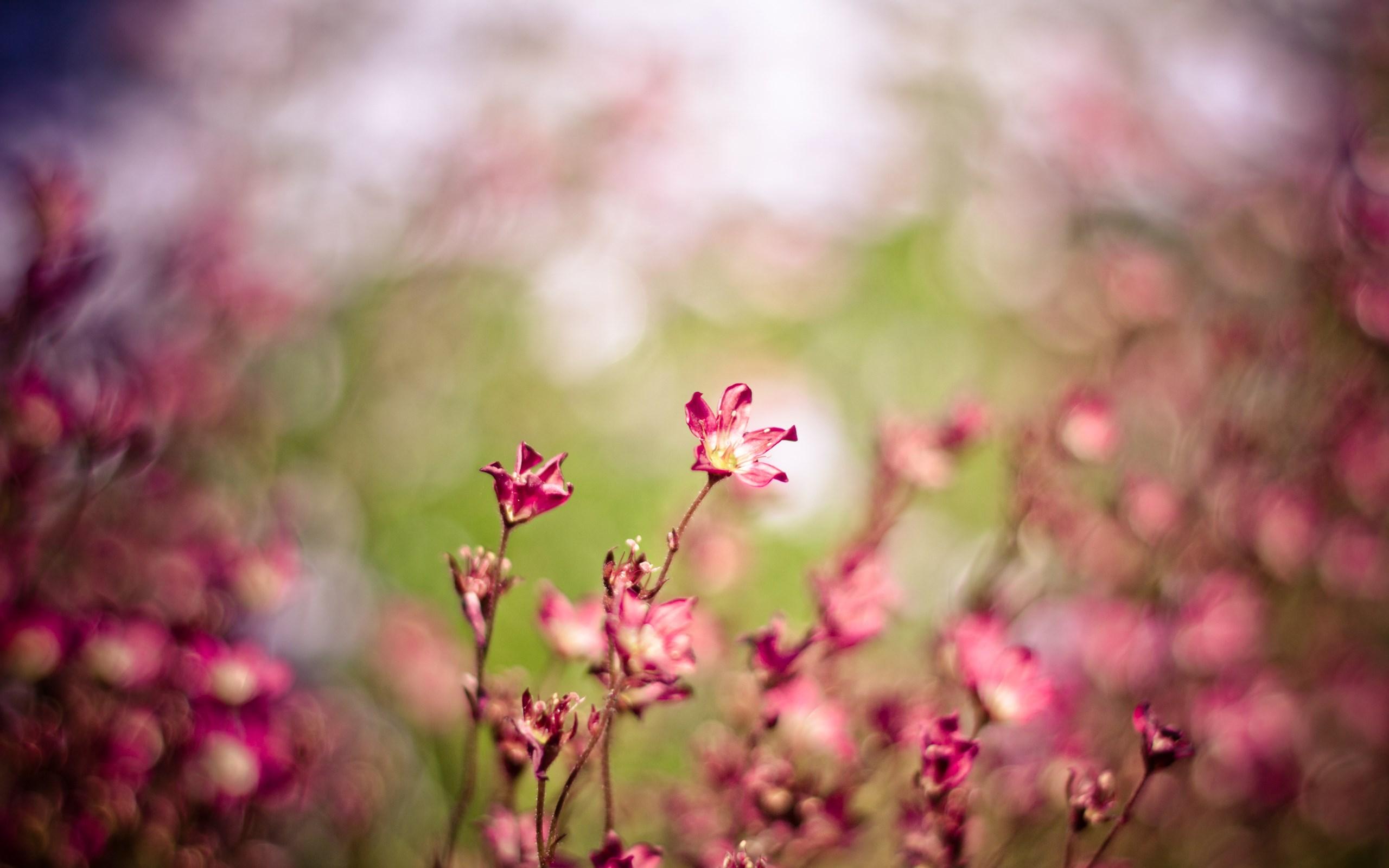 Pink Flowers Bokeh Nature
