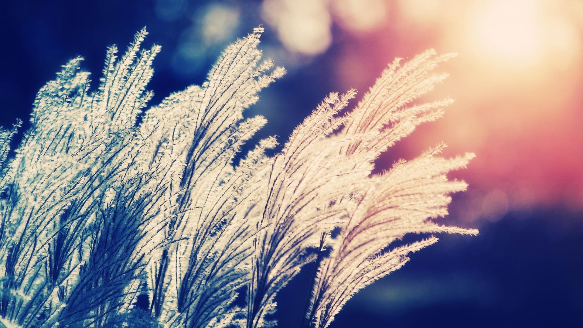 Nature bokeh sunlight depth of field reeds wallpaper
