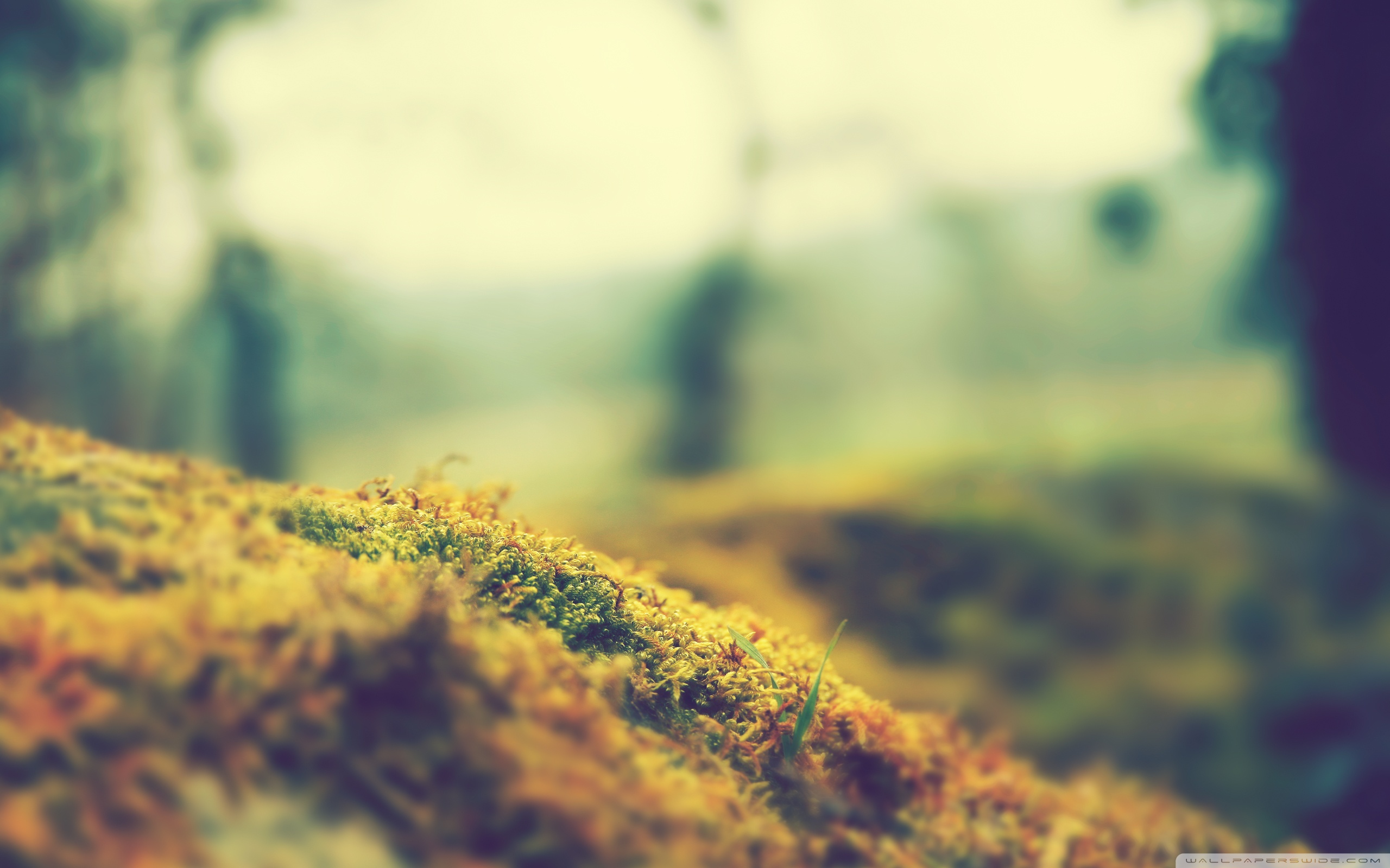Nature Bokeh Wallpapers