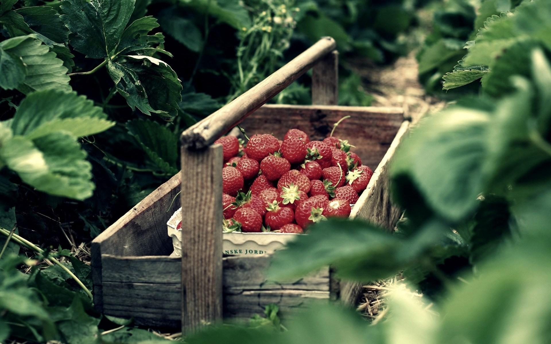 Nature Box Strawberry